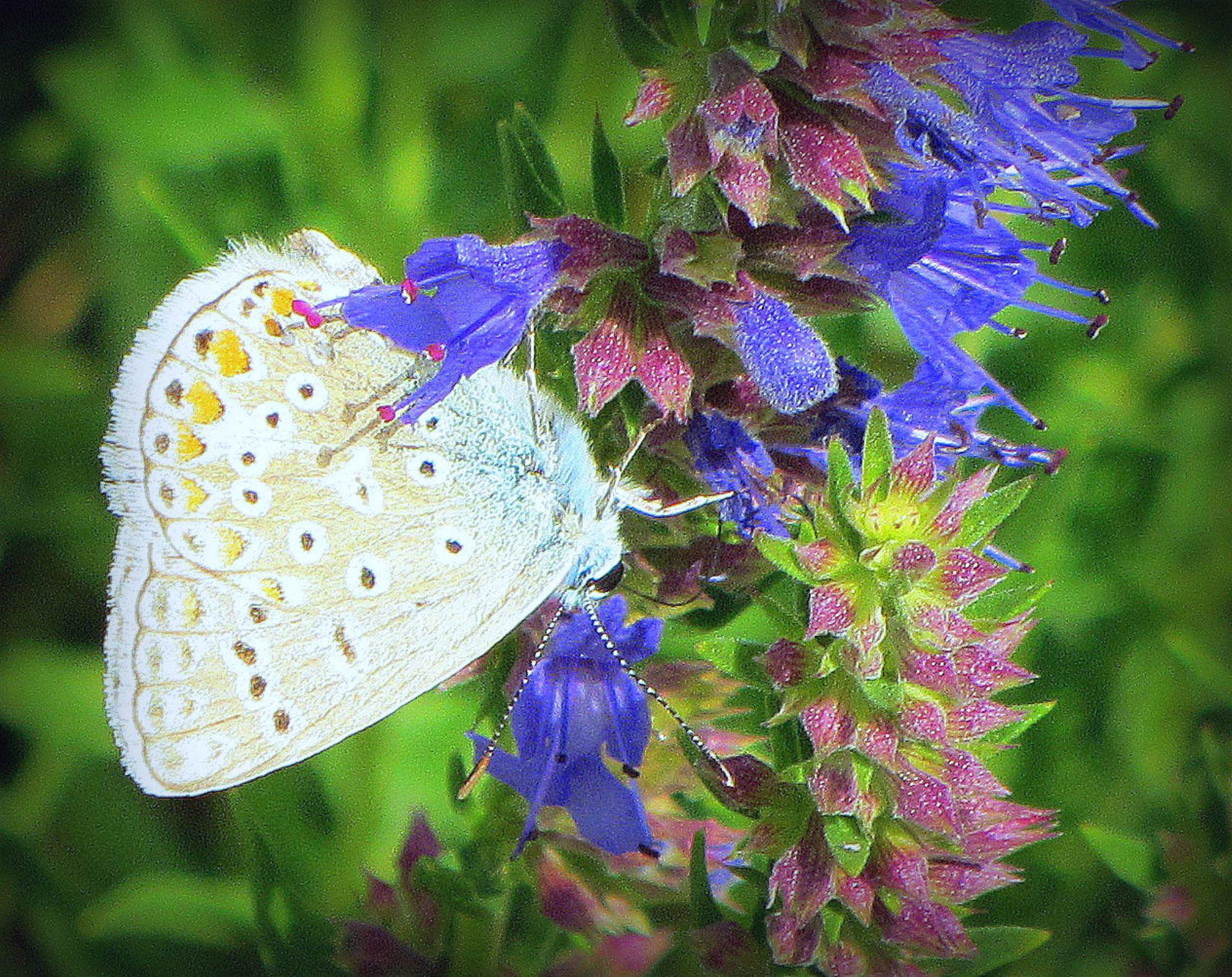 Beautiful Butterfly by asiyak1972