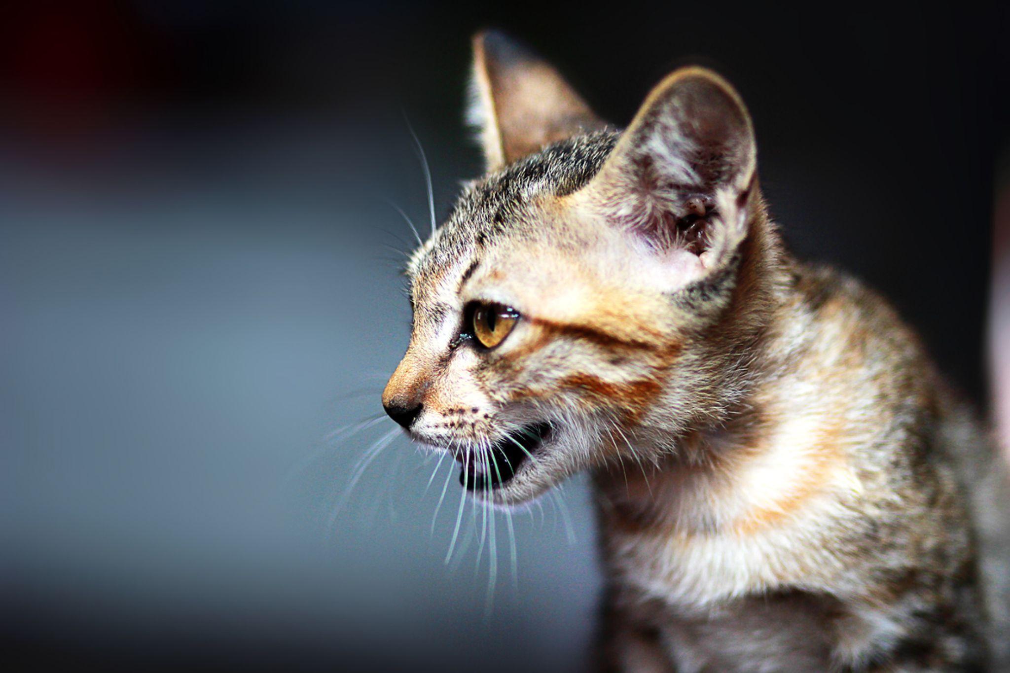 cat by ggpixs