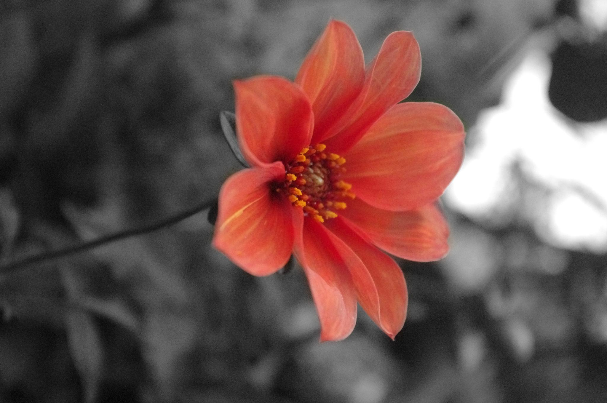 Lonely Flower by DanielleParry
