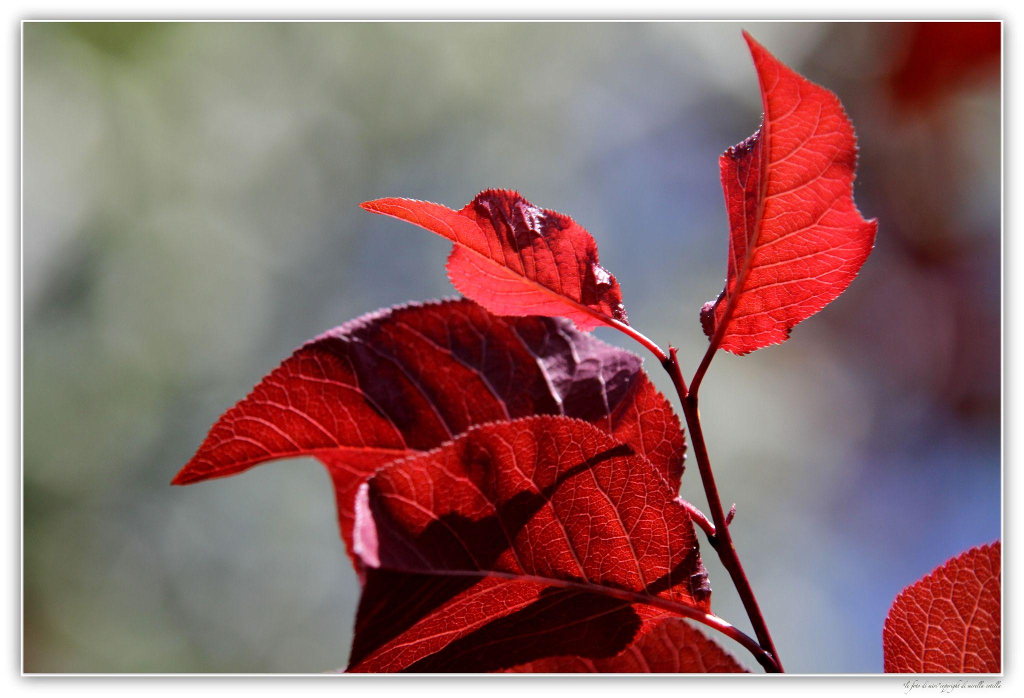 Red Details by mirella.cotella