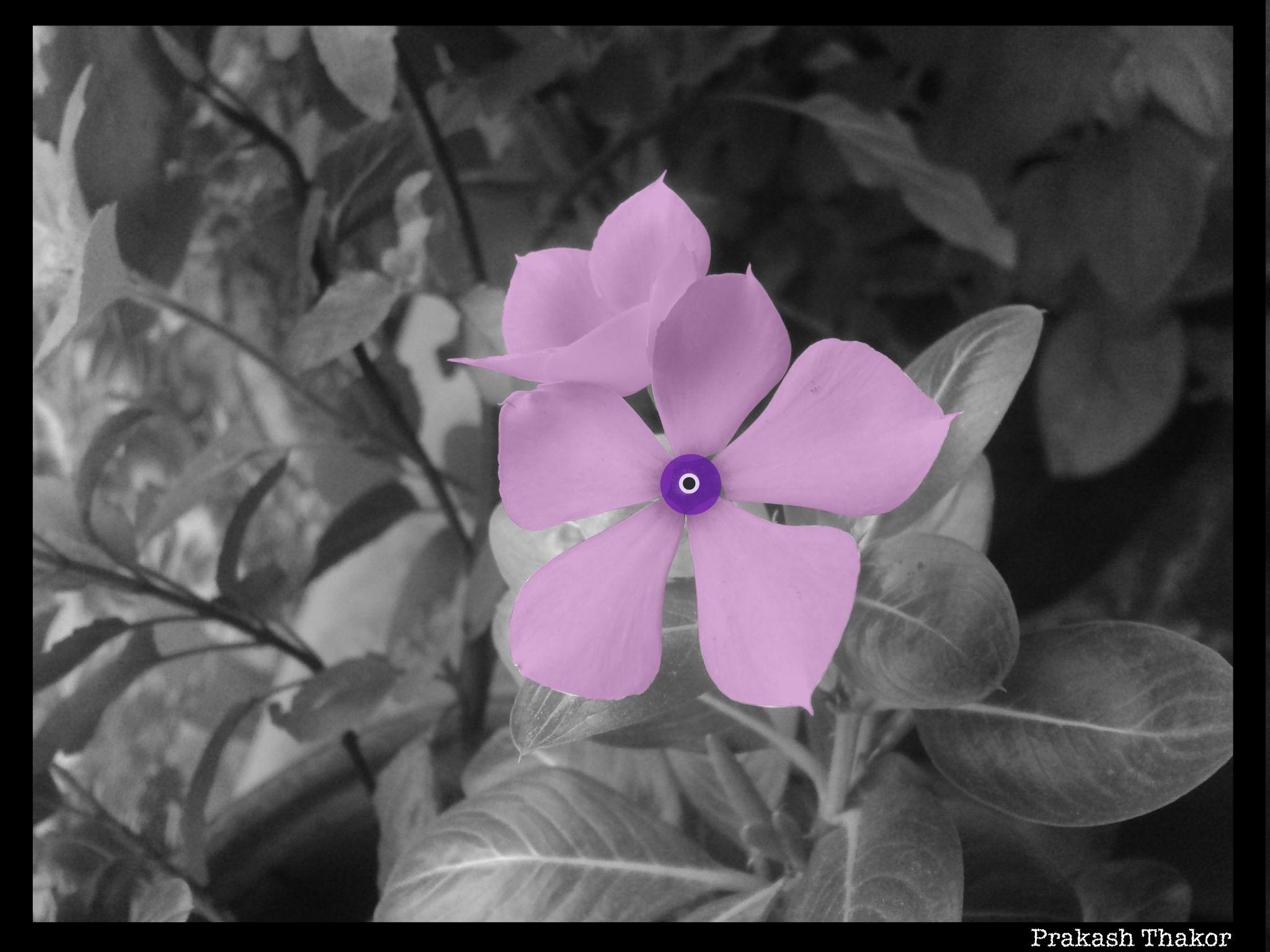 black and white click 2 color by prakashthakor90
