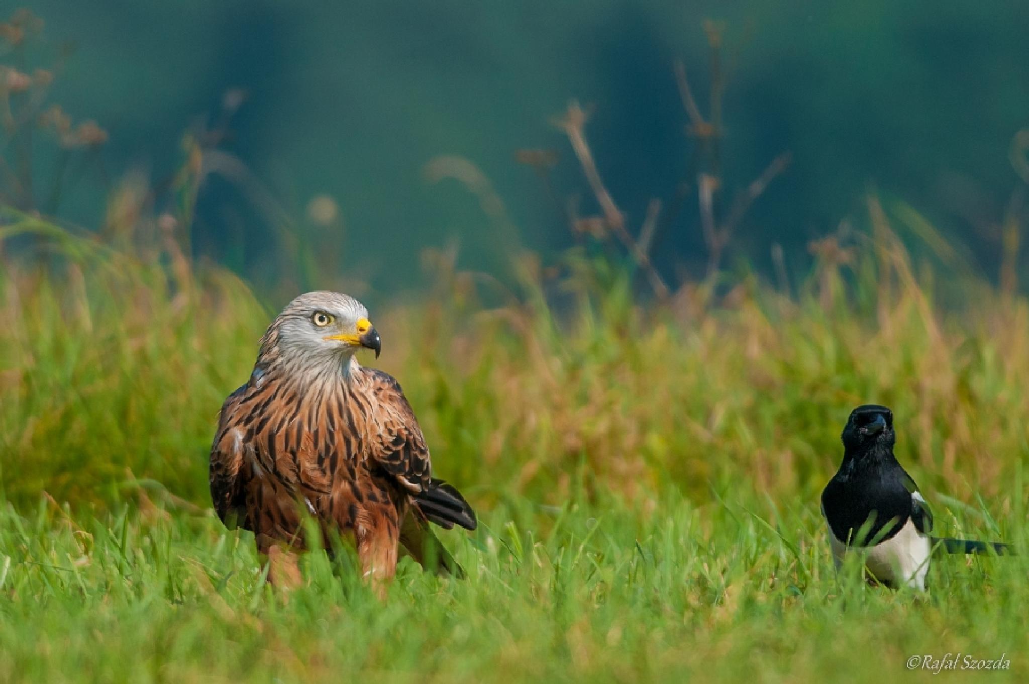 Photo in Nature #birds #nature #nikon #d300s #poland