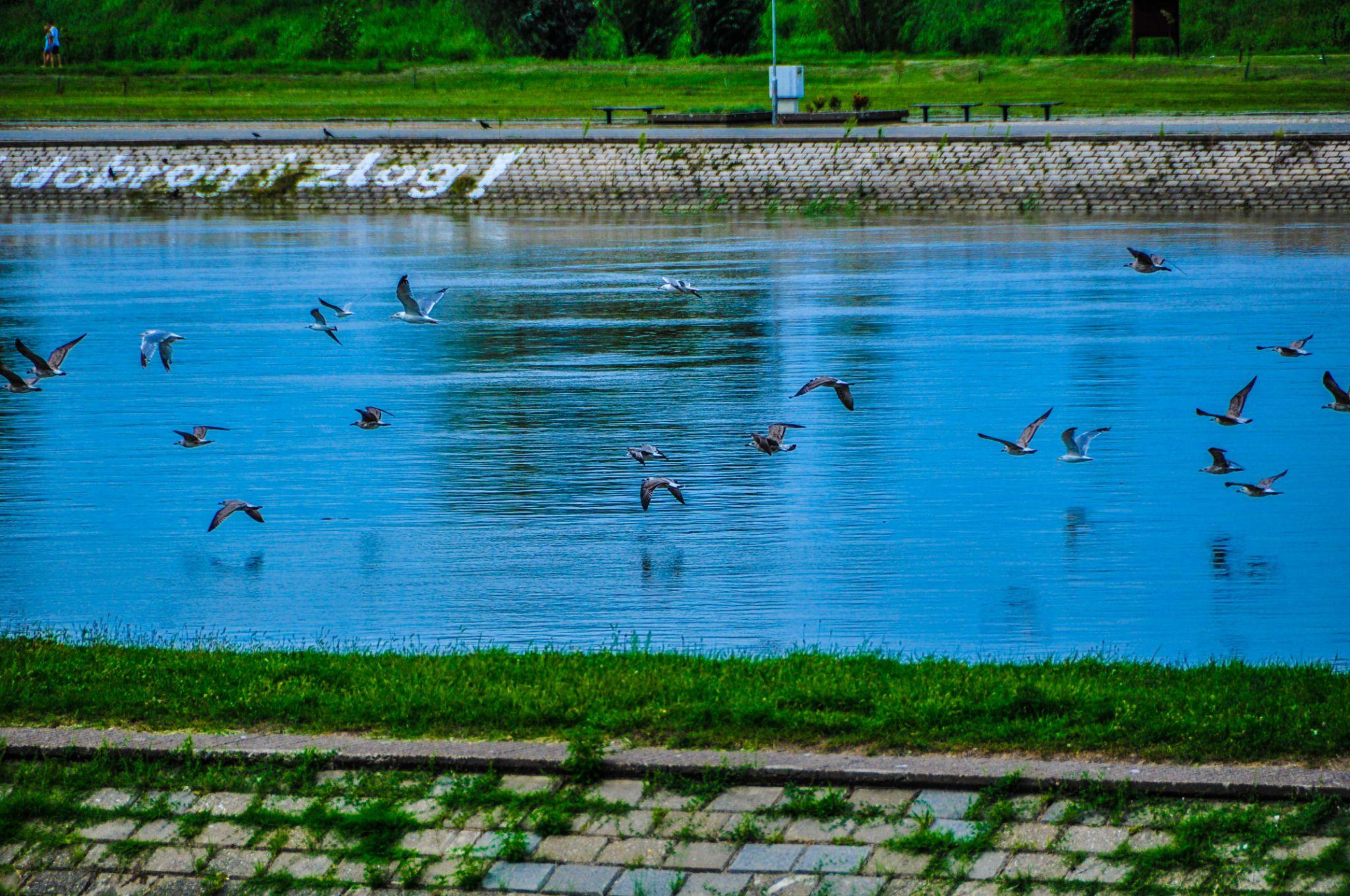 Flock by tamara.seles