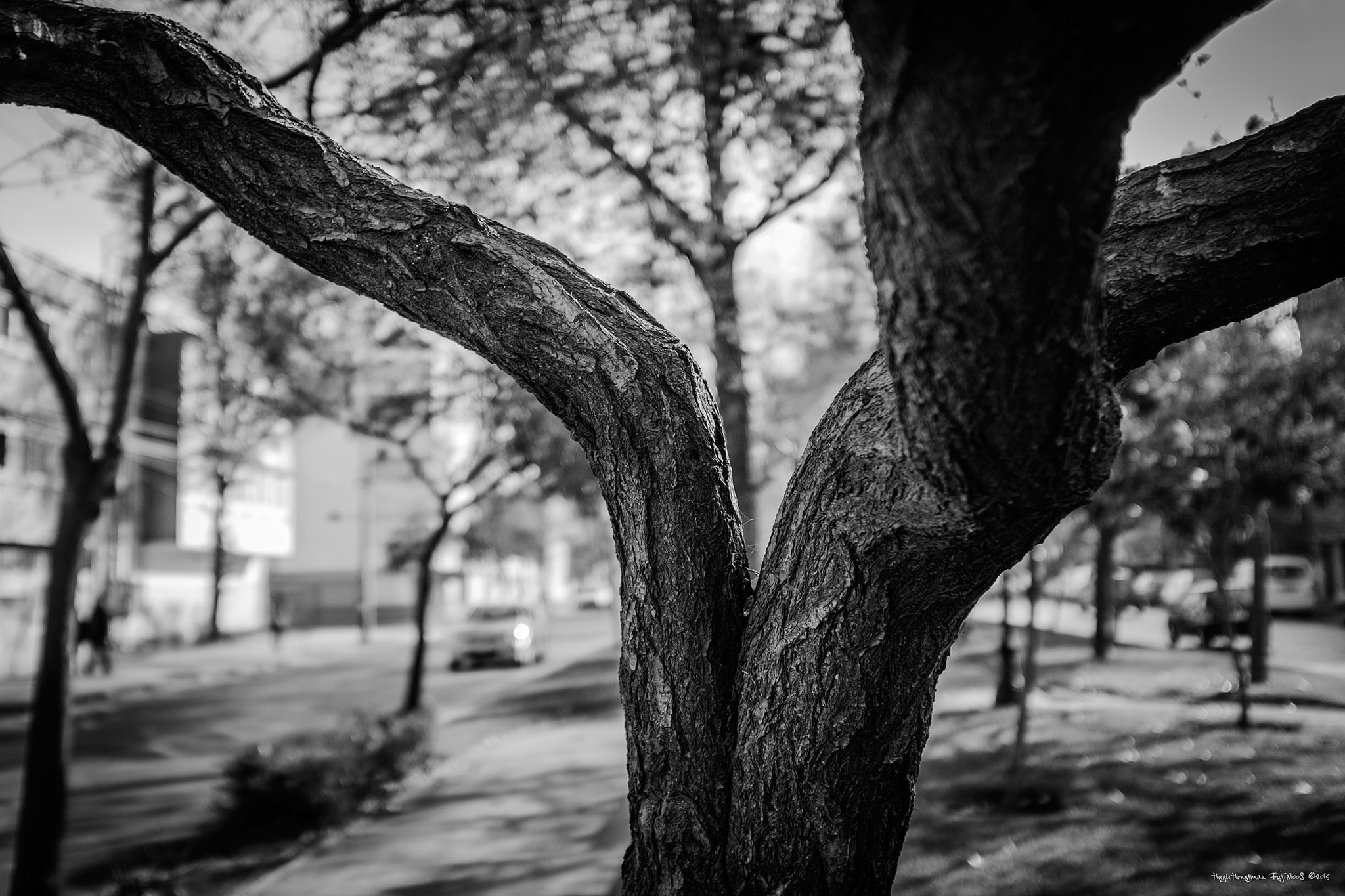 This is a Tree by Hugh Honeyman