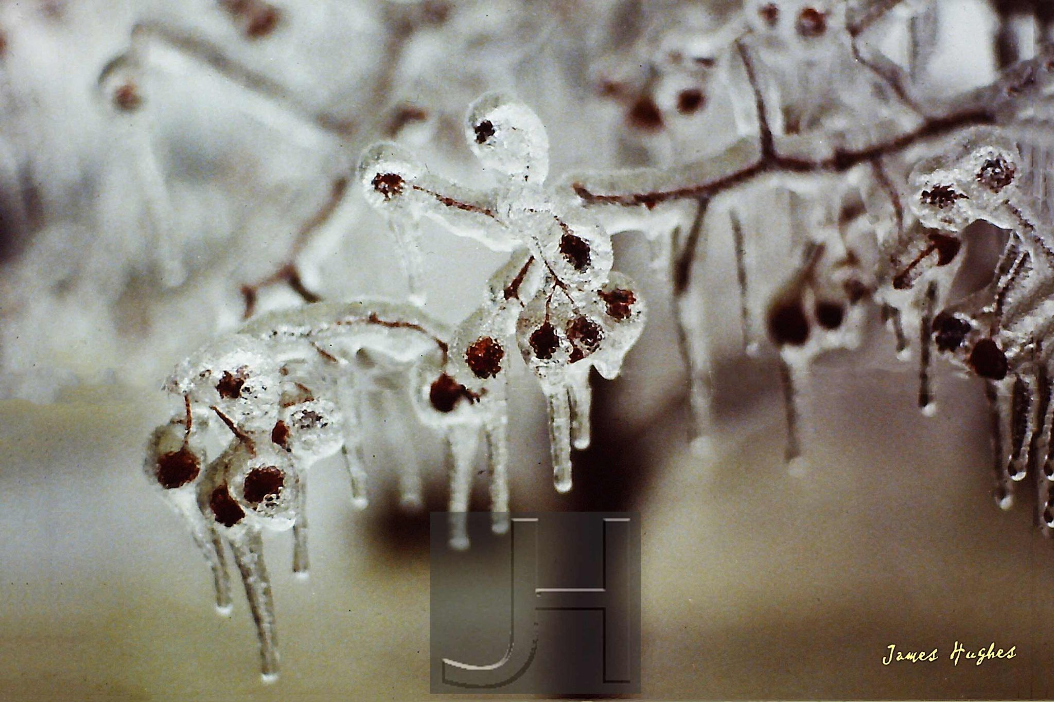Ice Covered Branch by James Hughes Photography
