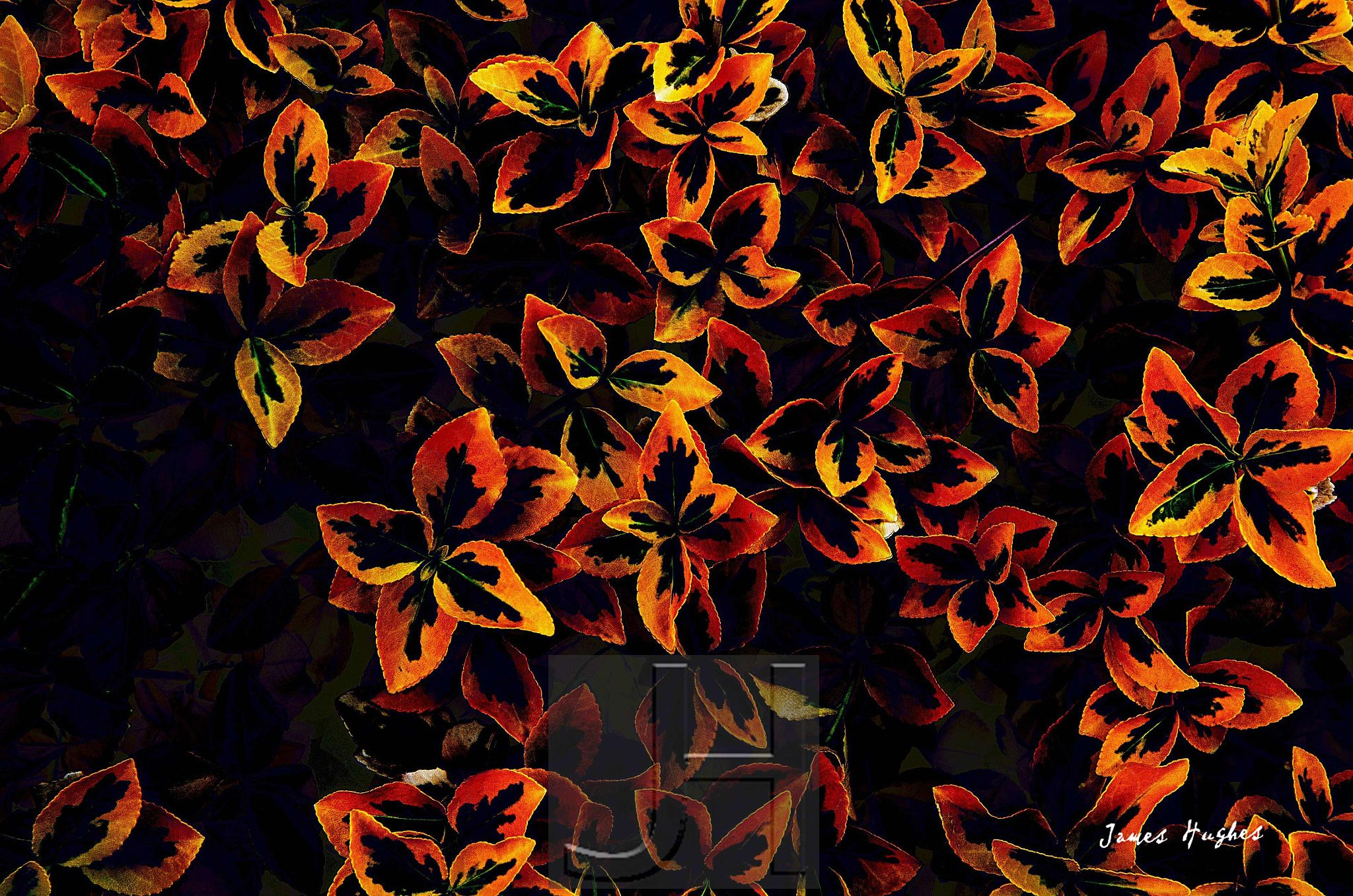 Euonymus japonicus 1 by James Hughes Photography