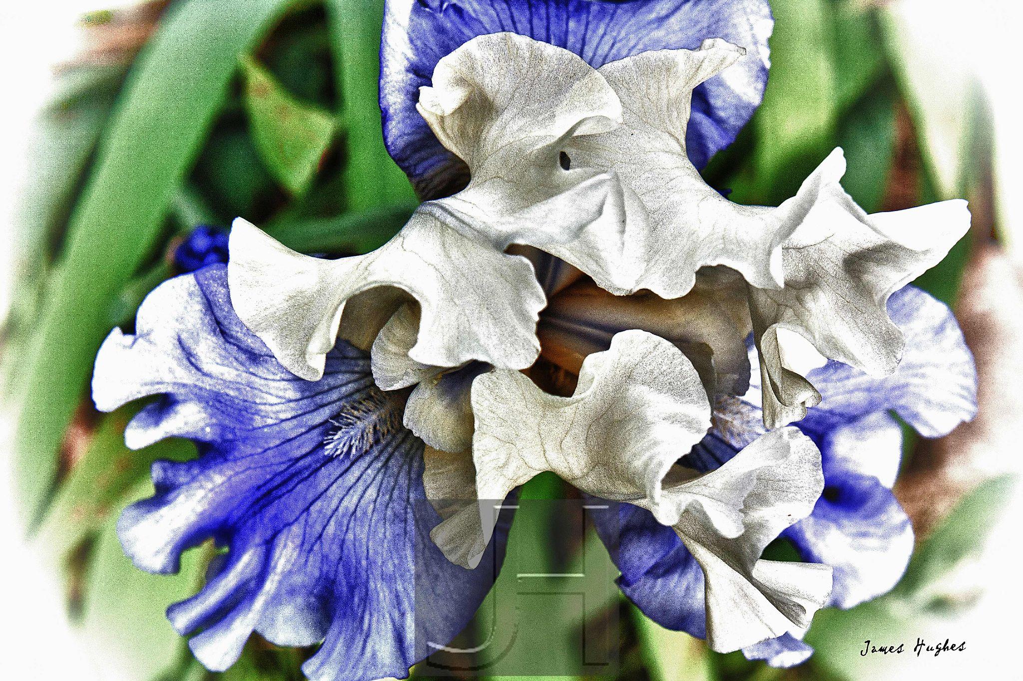 Iris 1 by James Hughes Photography