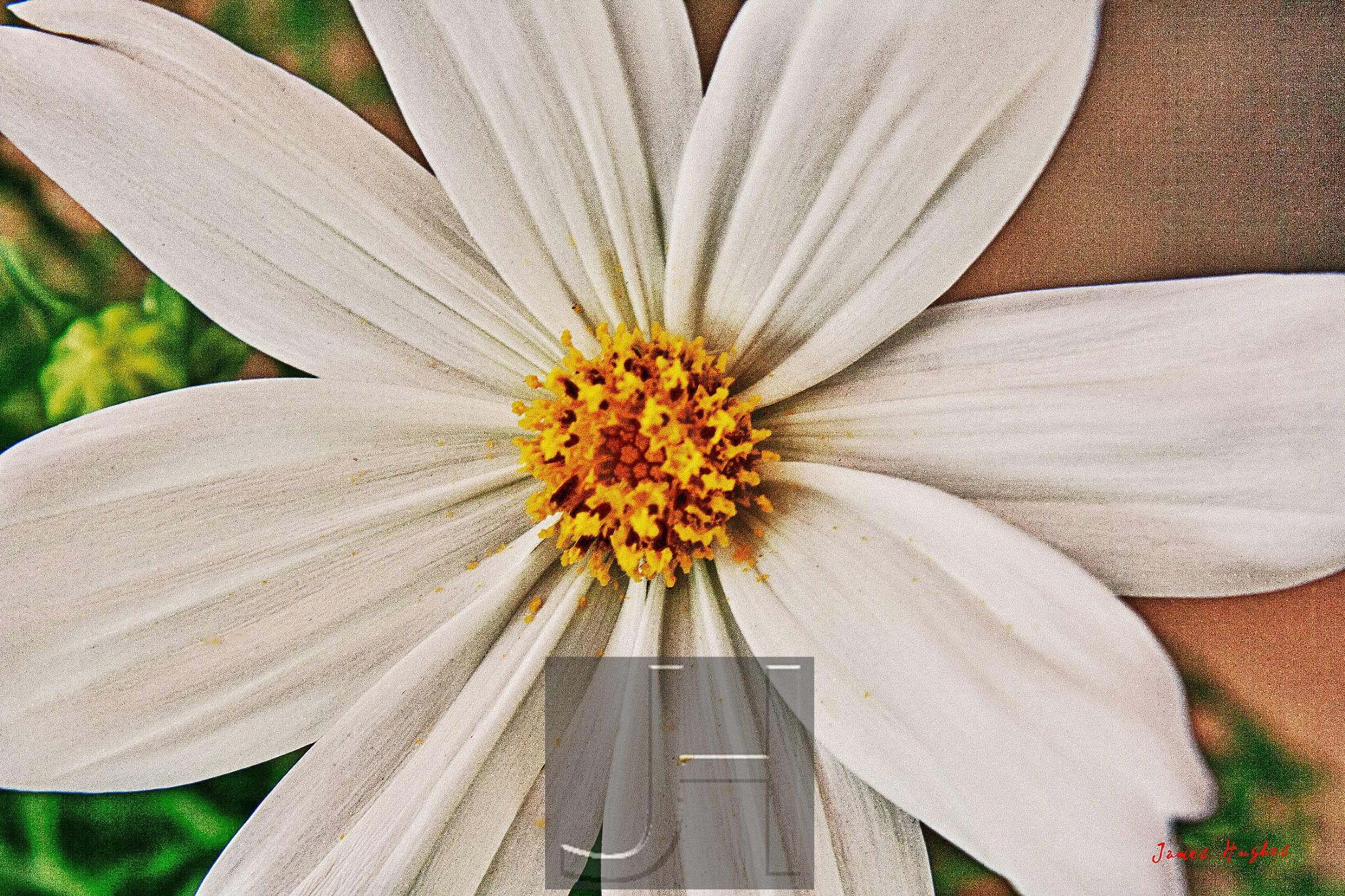 Cosmos by James Hughes Photography