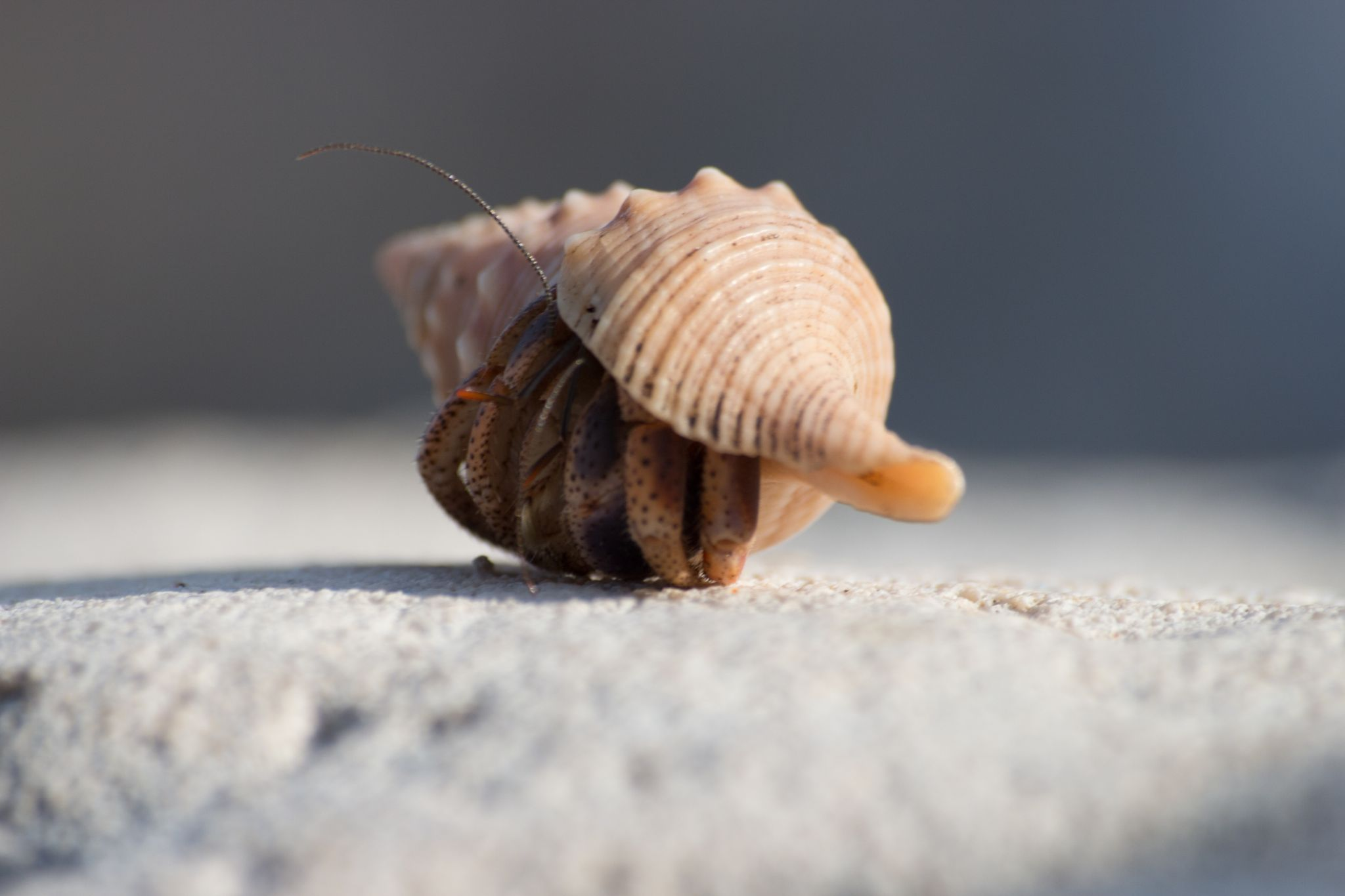 INTRUDER IN THE SNAIL by Harry Smit