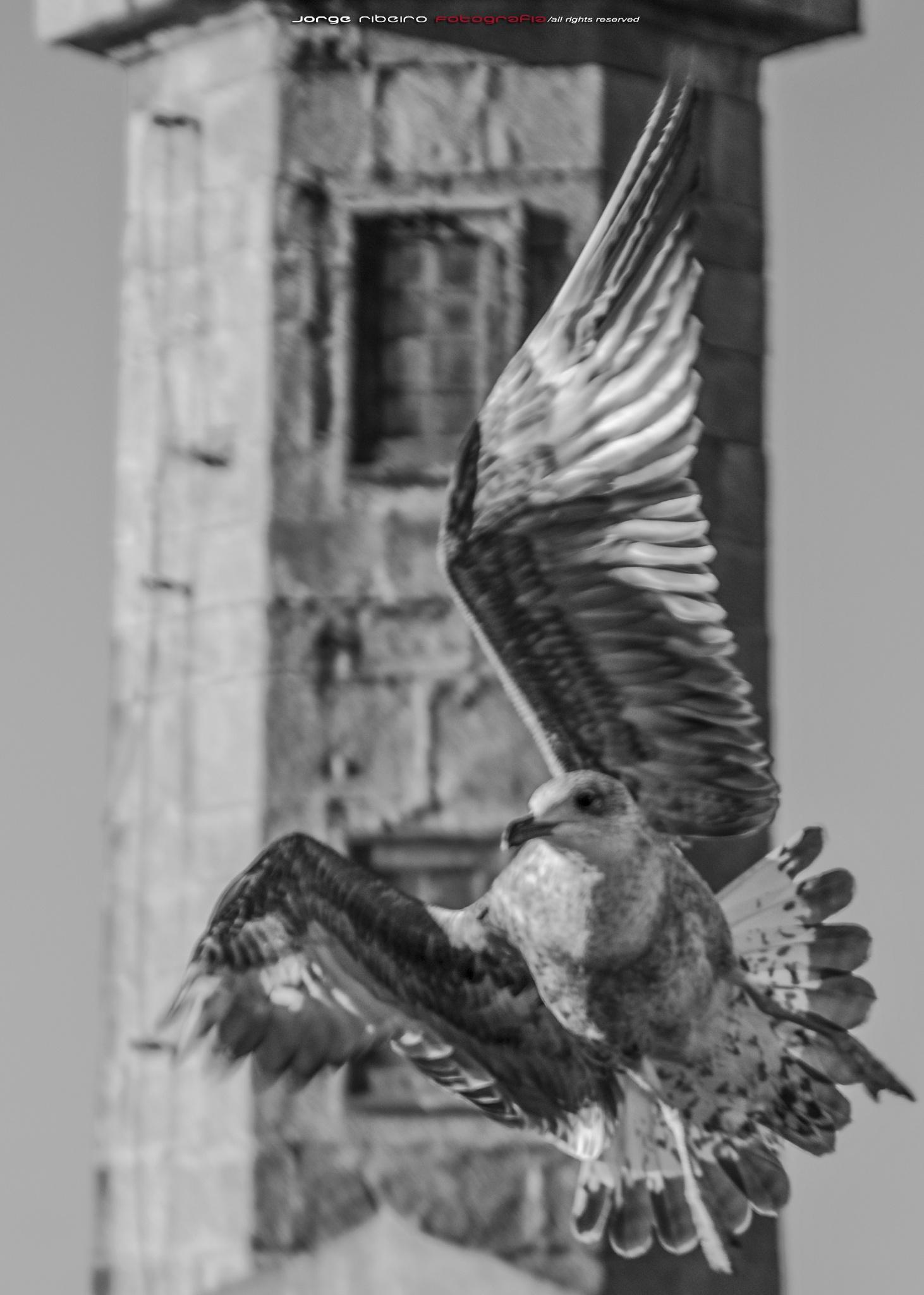 Bird by franciscojorge.dominguesribeiro