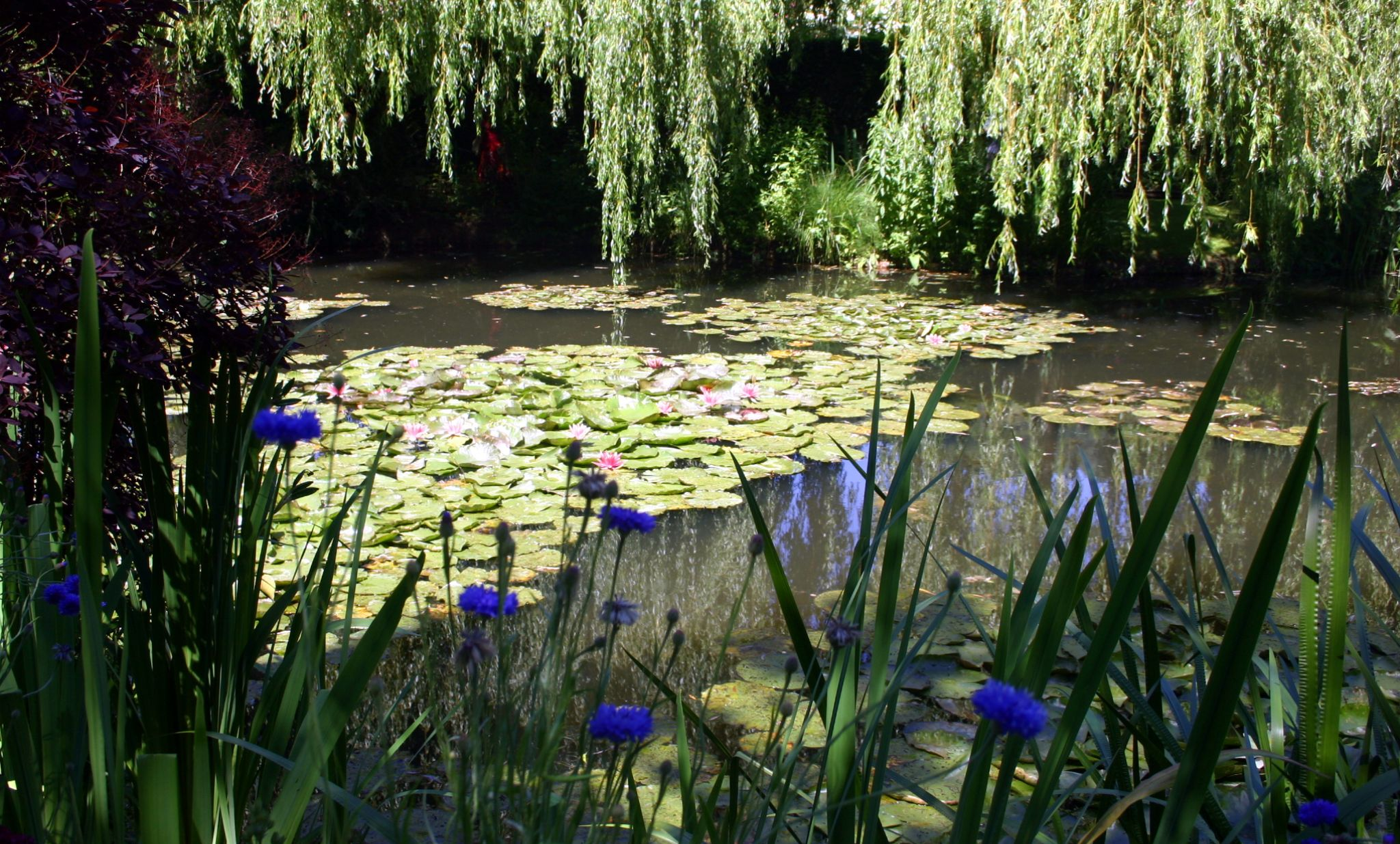 Jardin de Claude Monet à Giverny by Blueanna