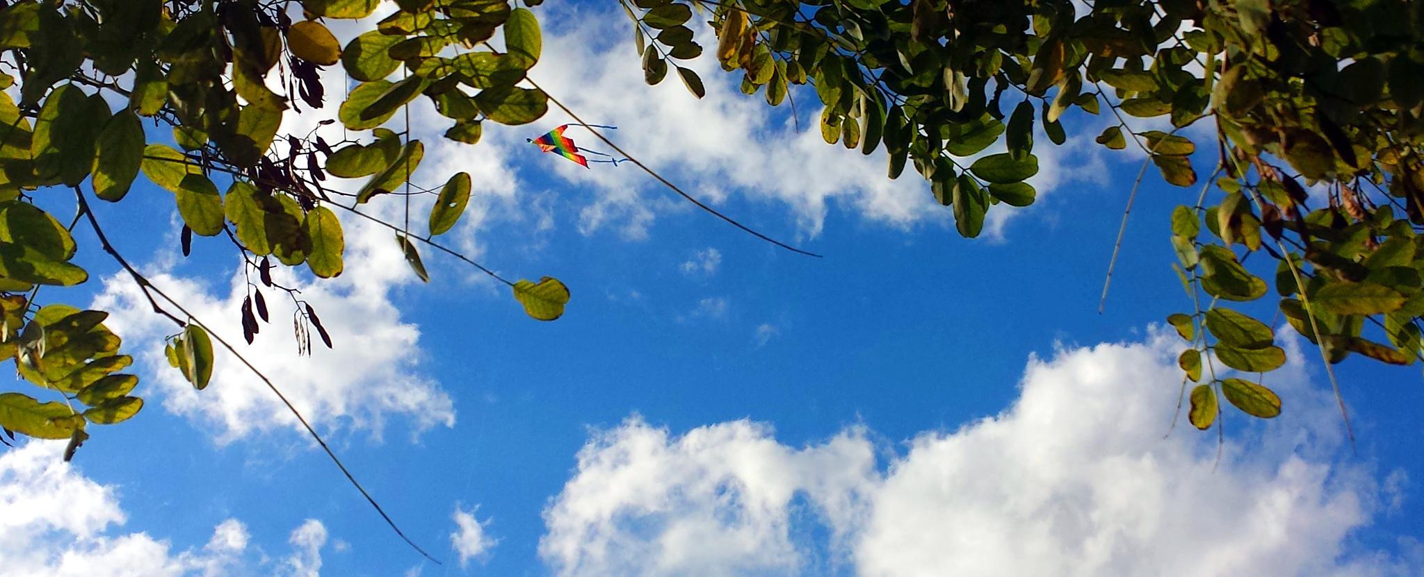 Little butterfly in the sky by Blueanna