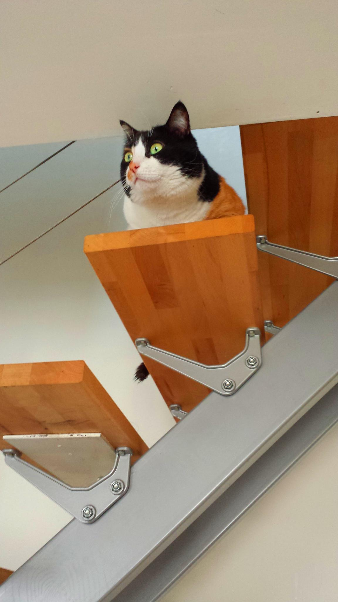 chat-rchitecture ;-) by Blueanna