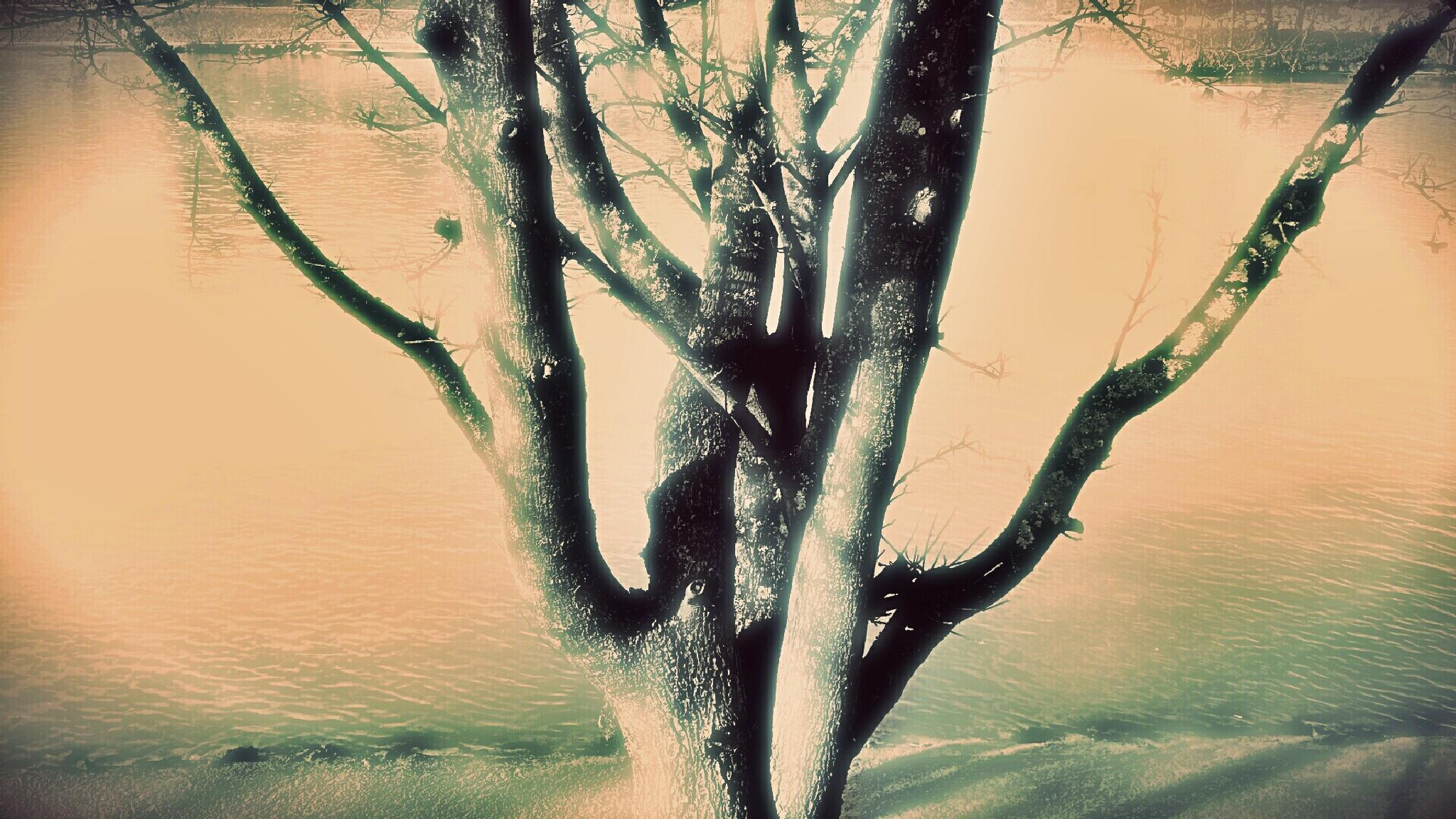 Wonder tree by Blueanna