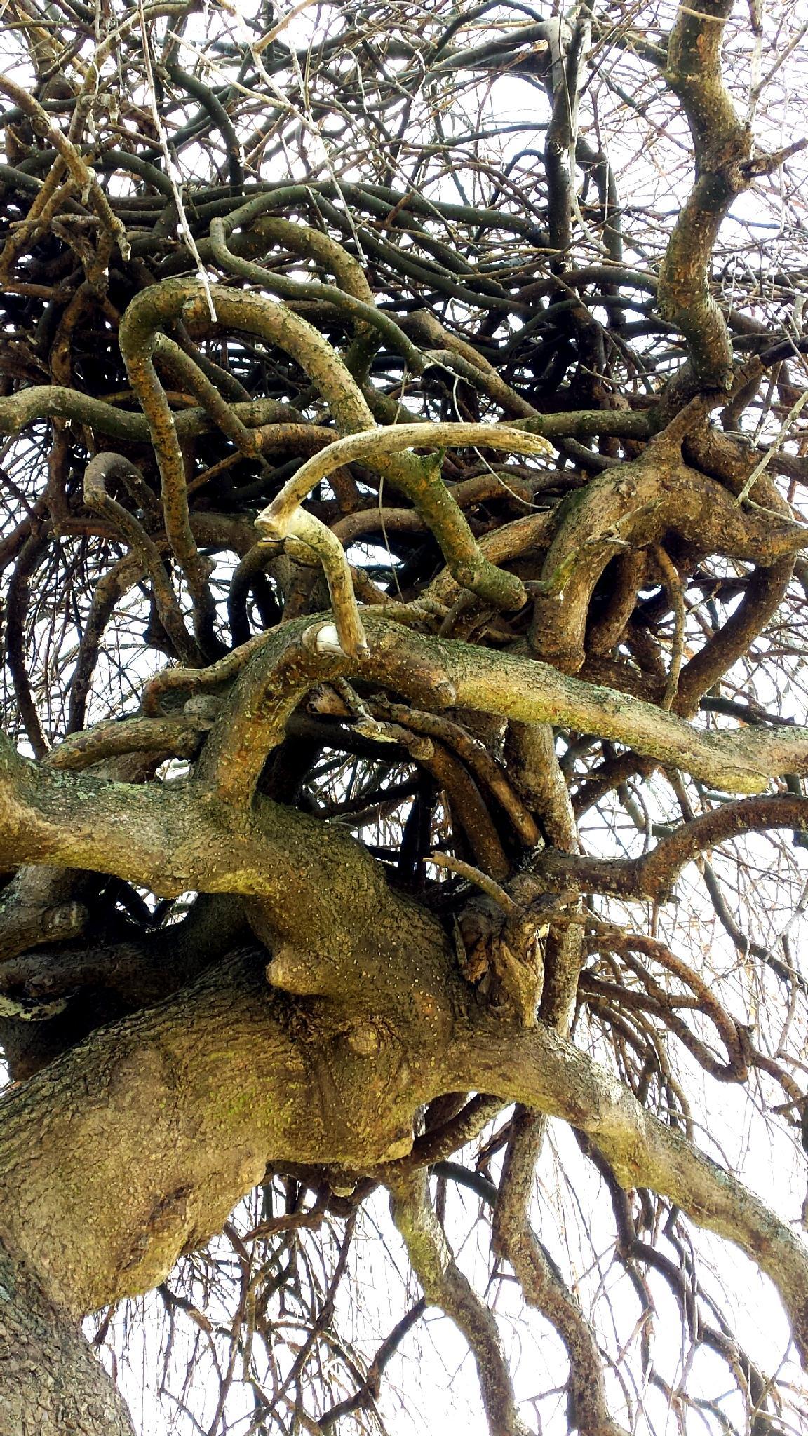 Ceci est un arbre ! by Blueanna