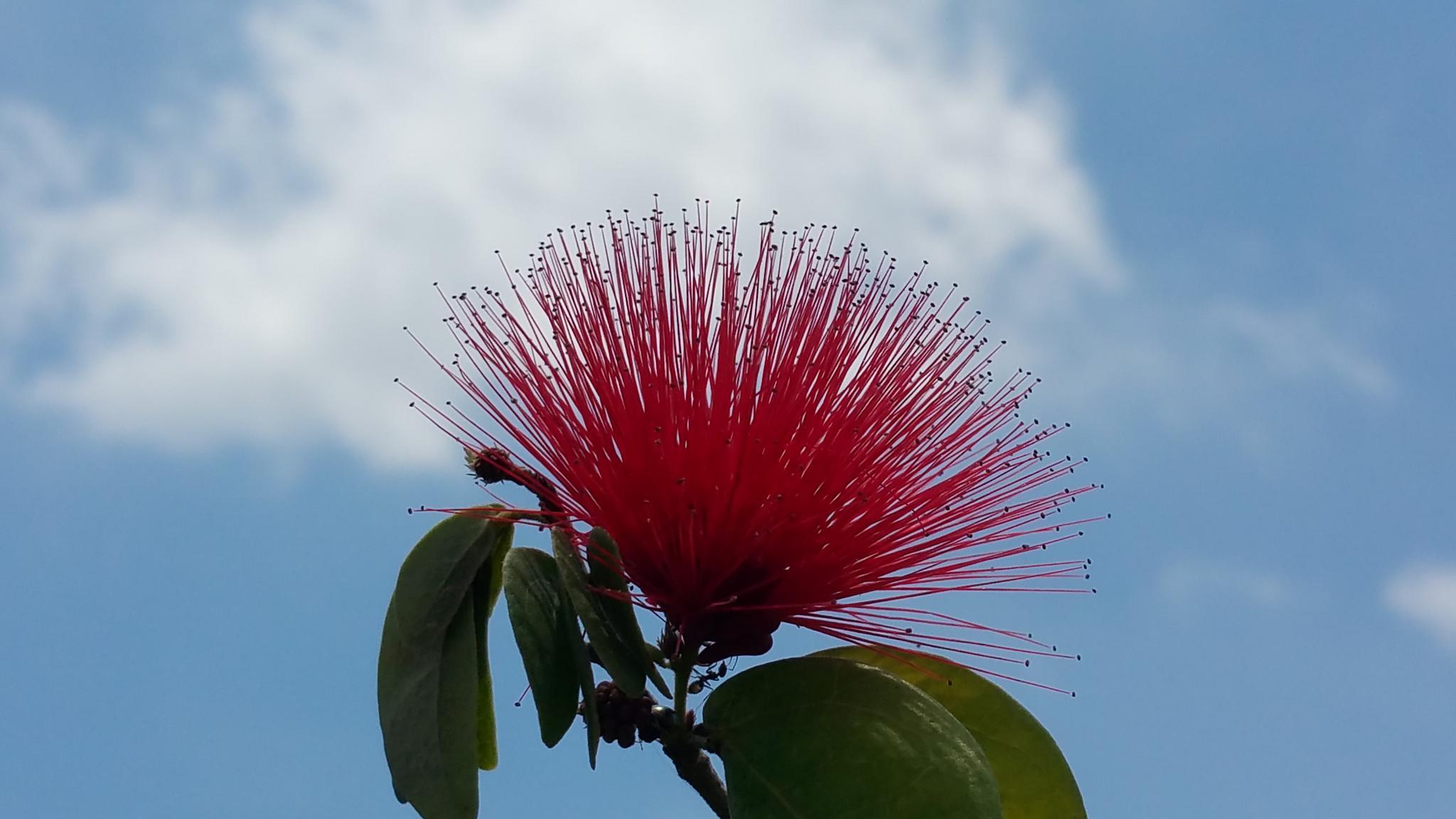 Flower by leehenrysg