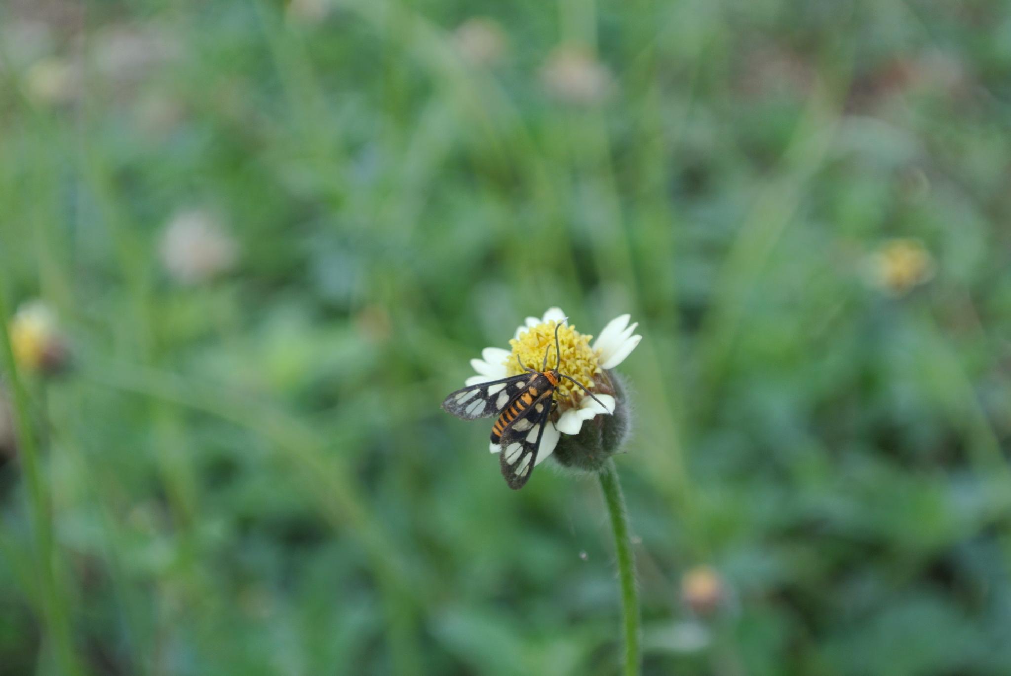 Fly on Flower by leehenrysg
