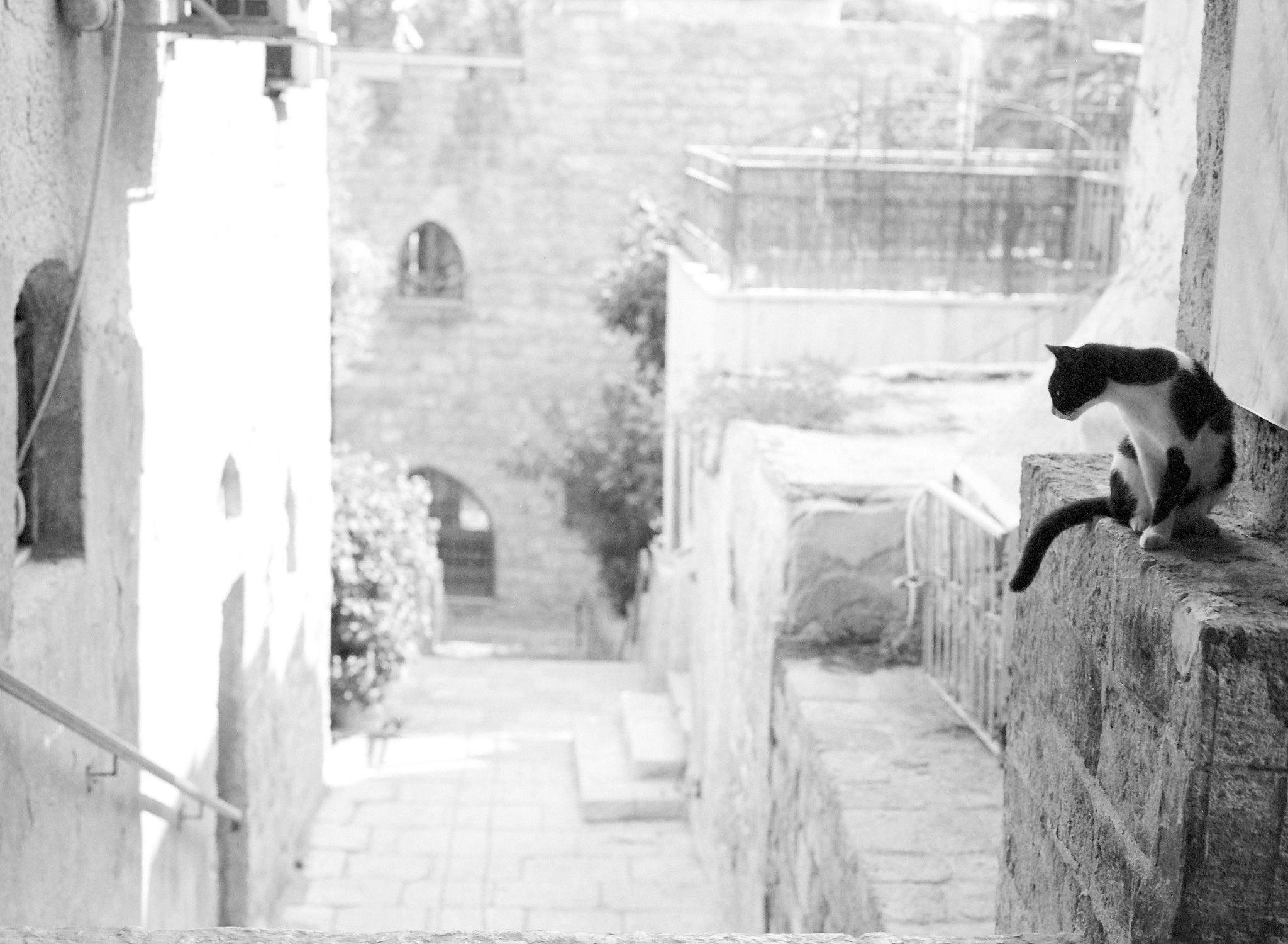 Old Jaffa, Israel by Vadim Becker