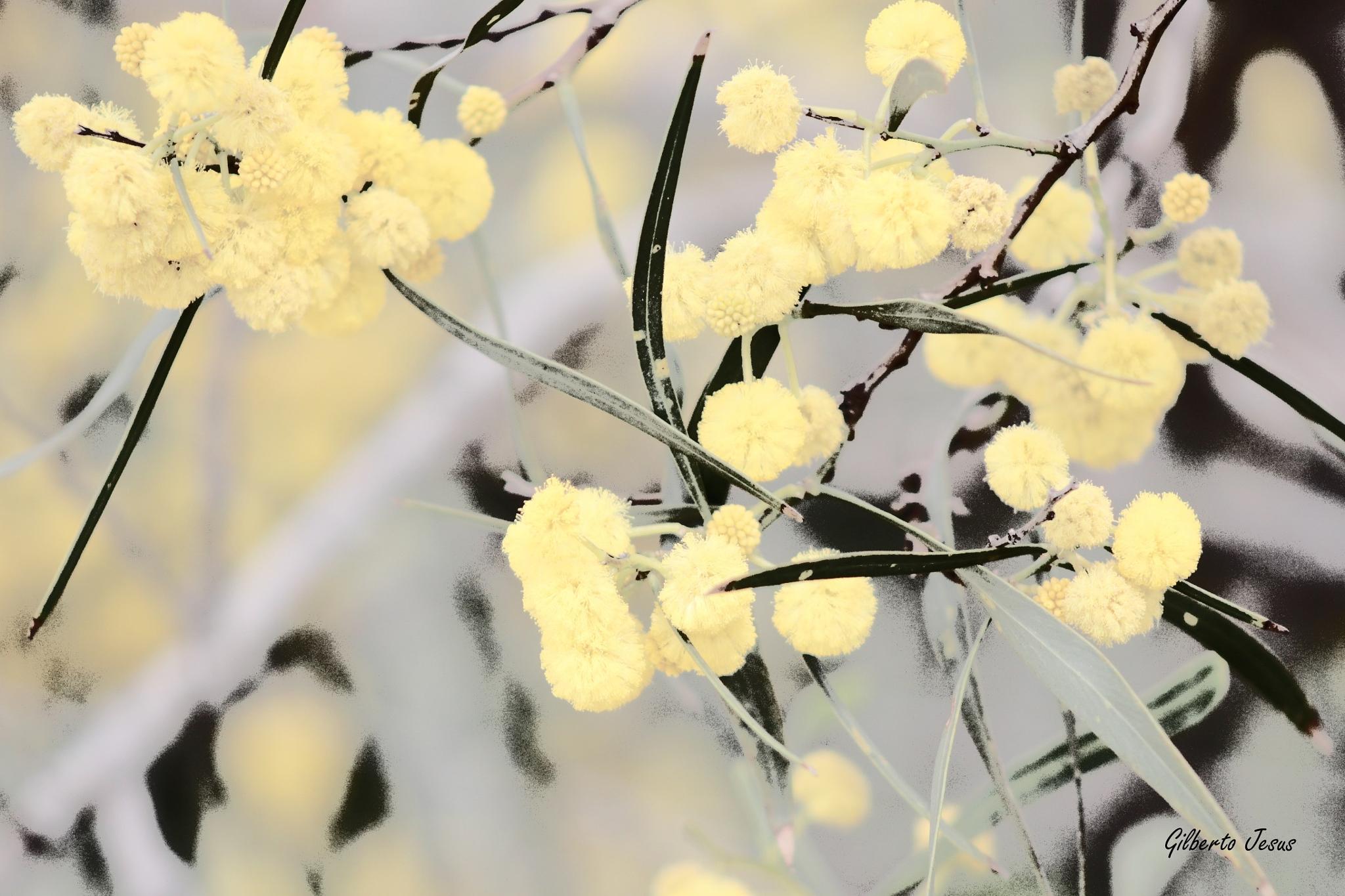 Springtime by Gilberto Jesus