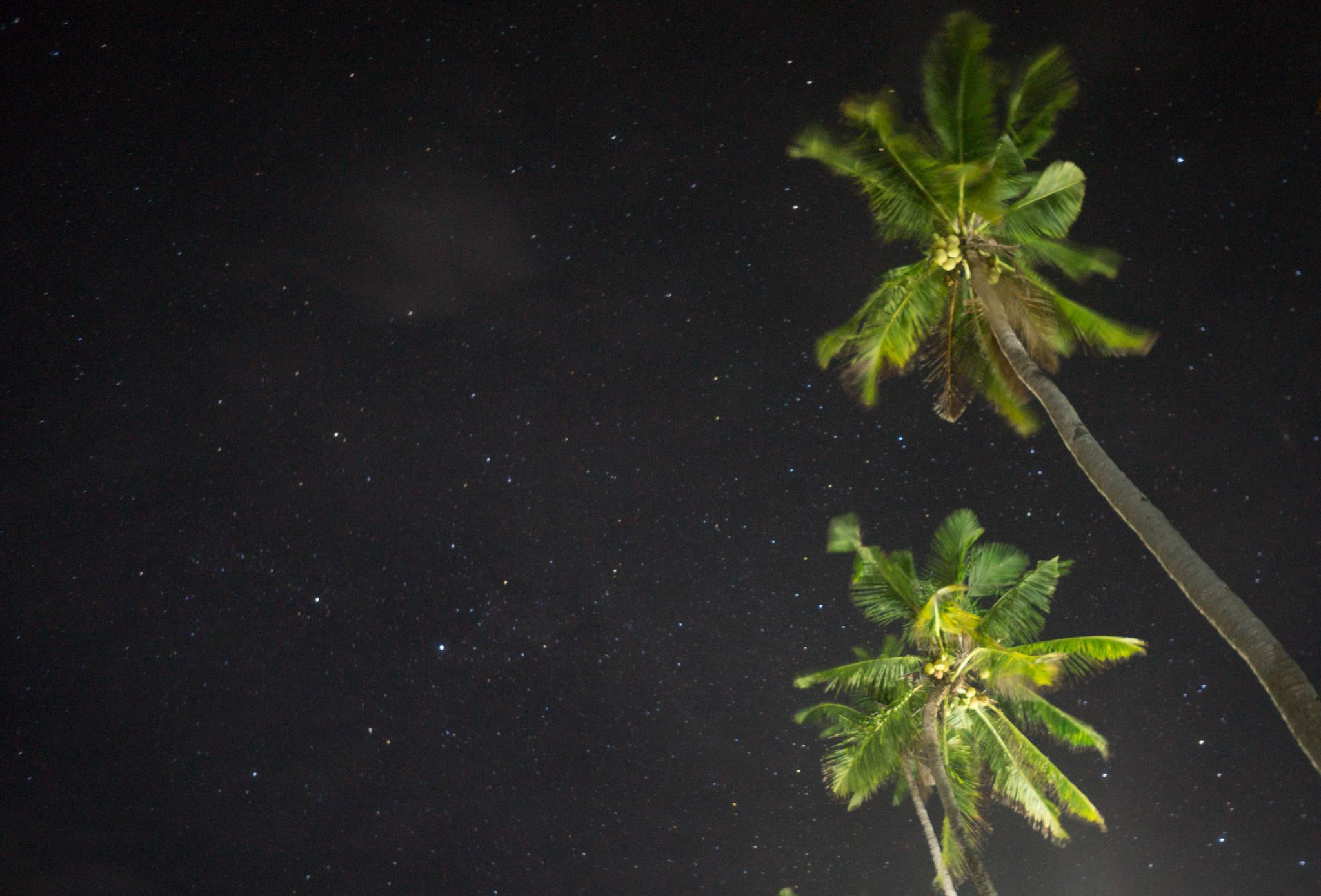 Photo in Astrophotography #stars #apo island #philippines #nigh photography #night sky