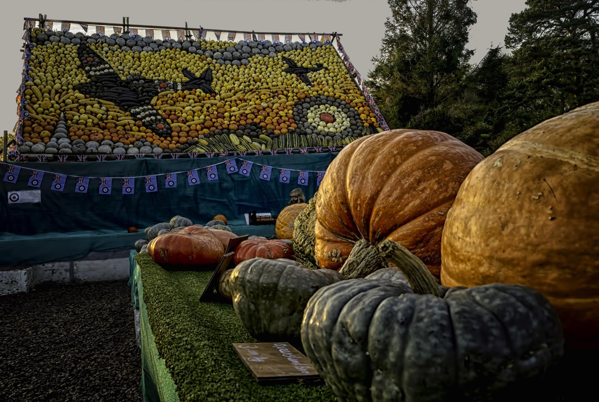 Pumpkins by Alan Fife