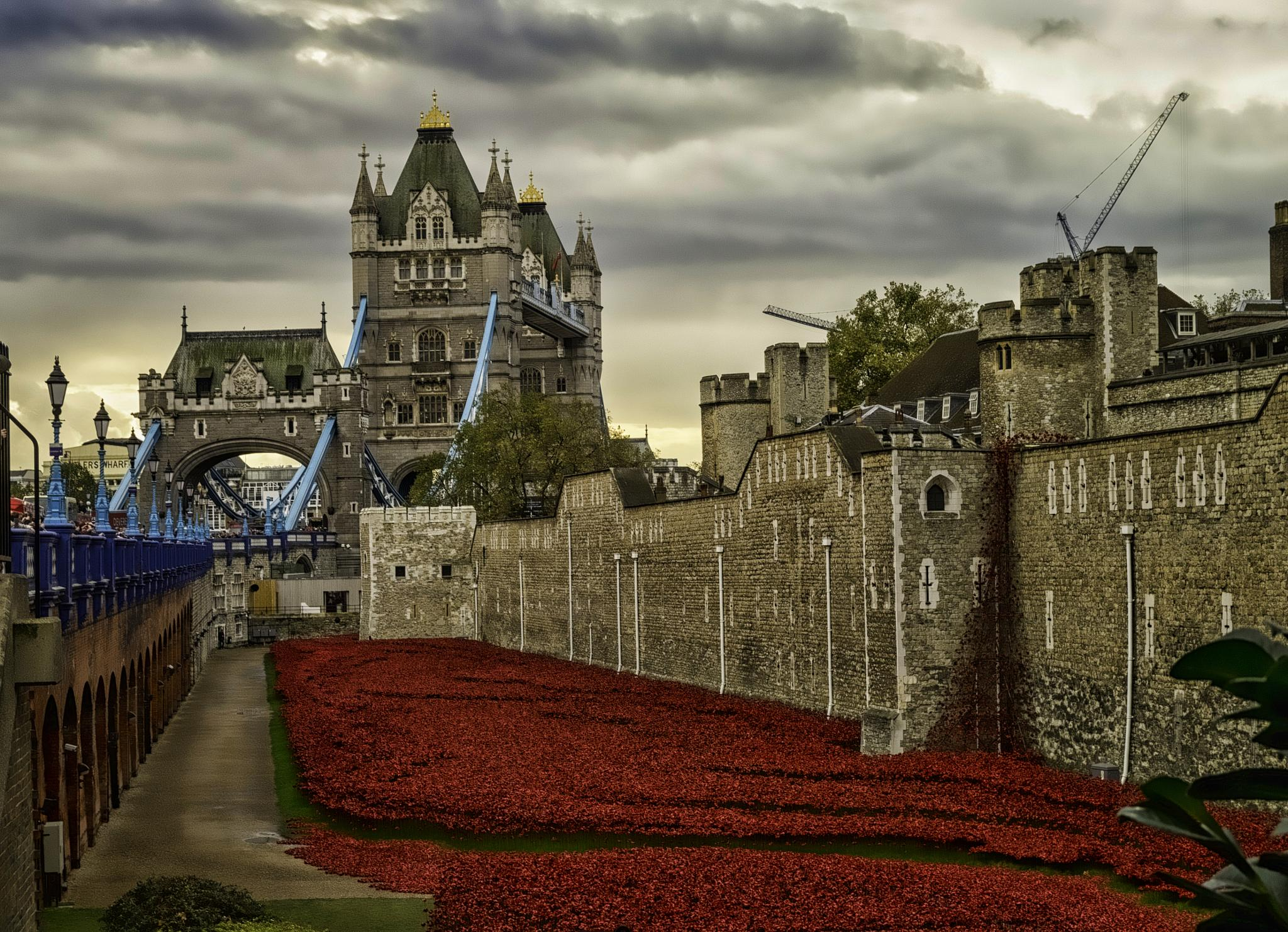 Lest we forget by Alan Fife