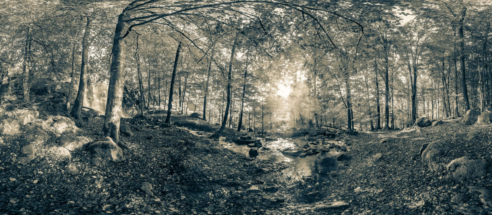 Forest of my dreams by Fredrik Andreasson