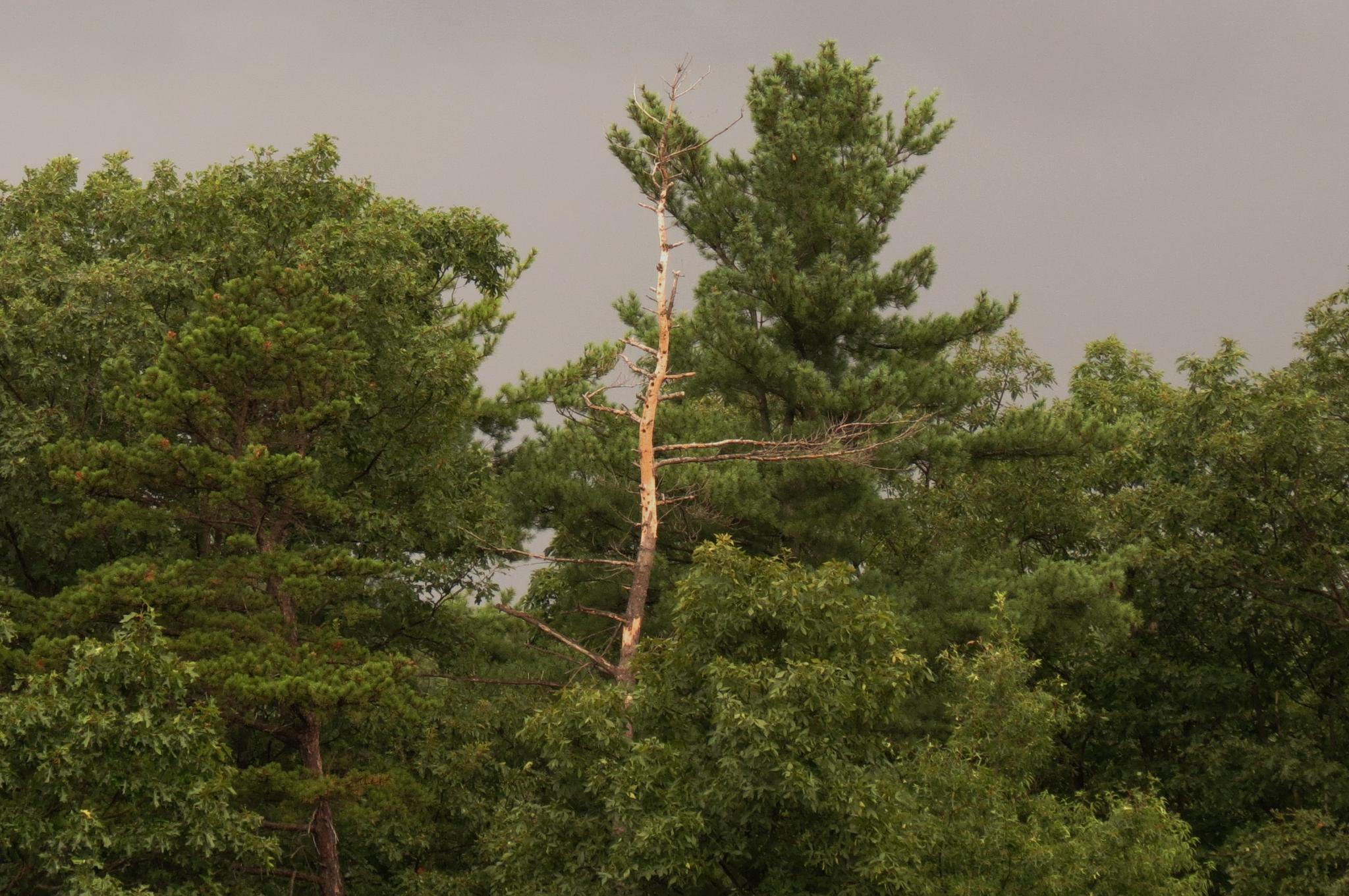 Rain day at the Lake by denabrown