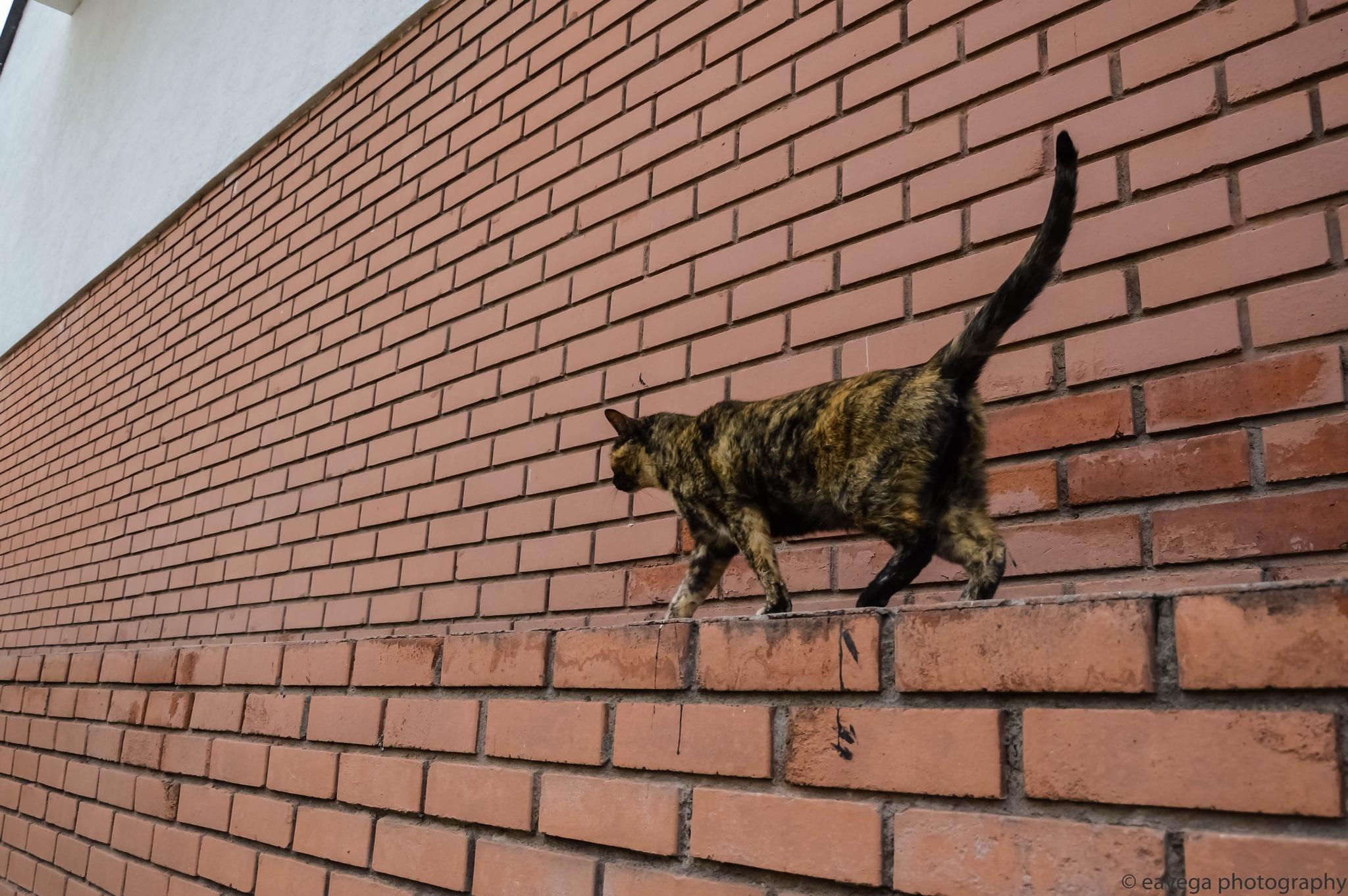 Catwalk by Eduardo Vega H