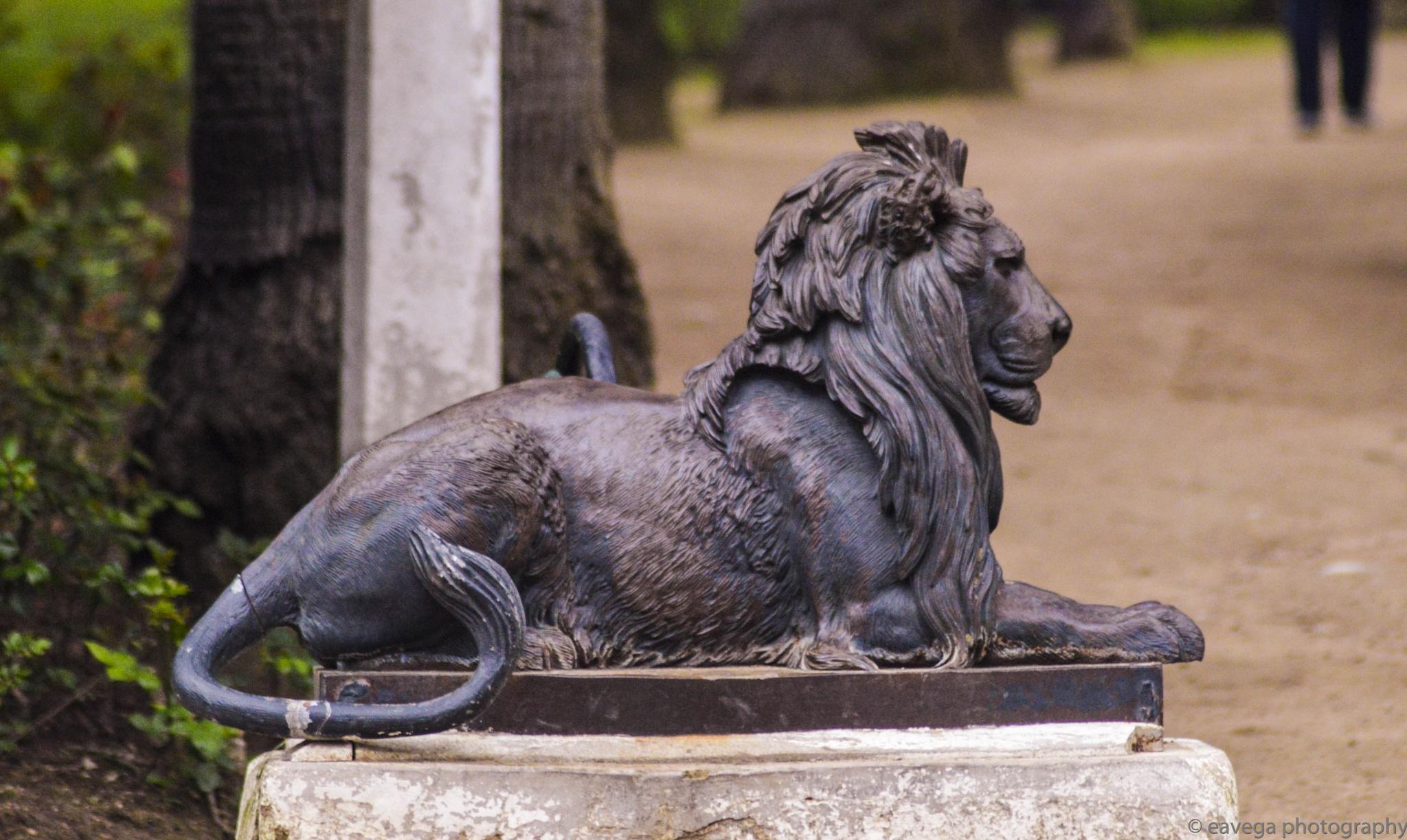 Gate lion by Eduardo Vega H