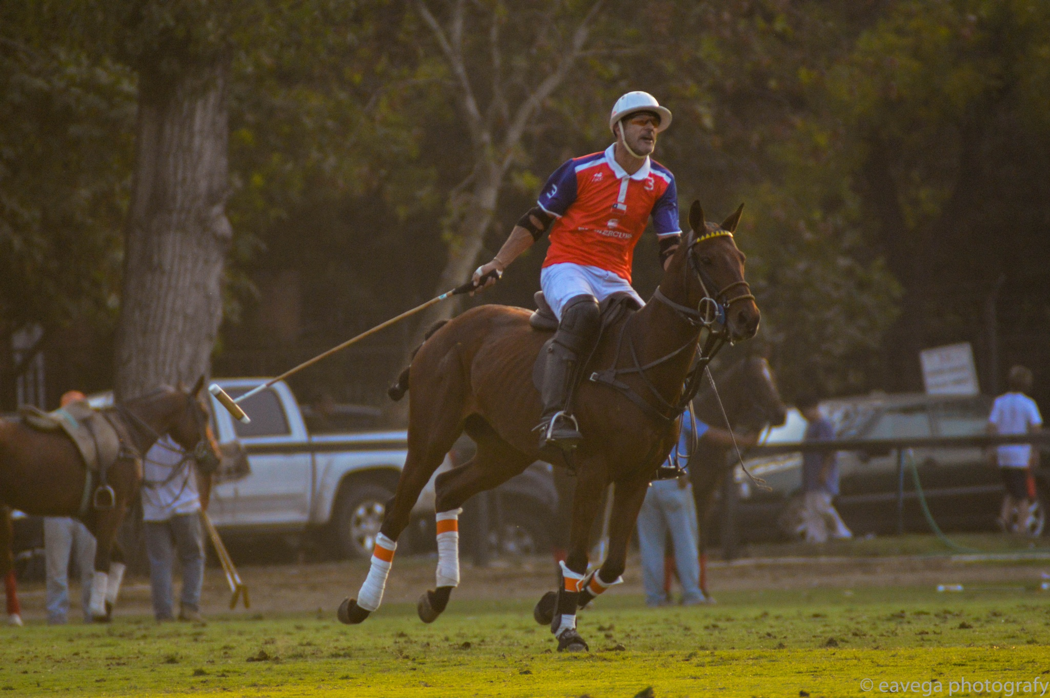 Fresh horse by Eduardo Vega H