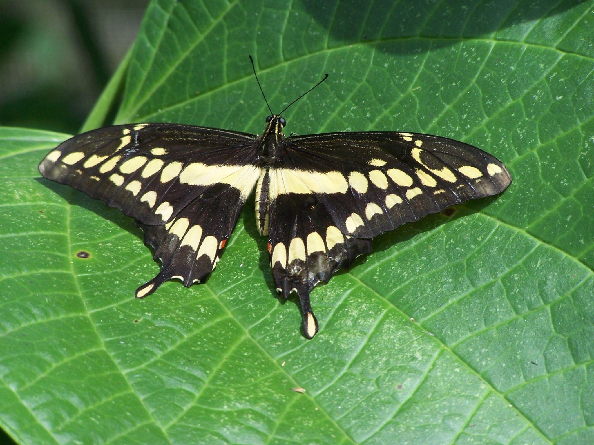 butterfly  by Eduardo Vega H