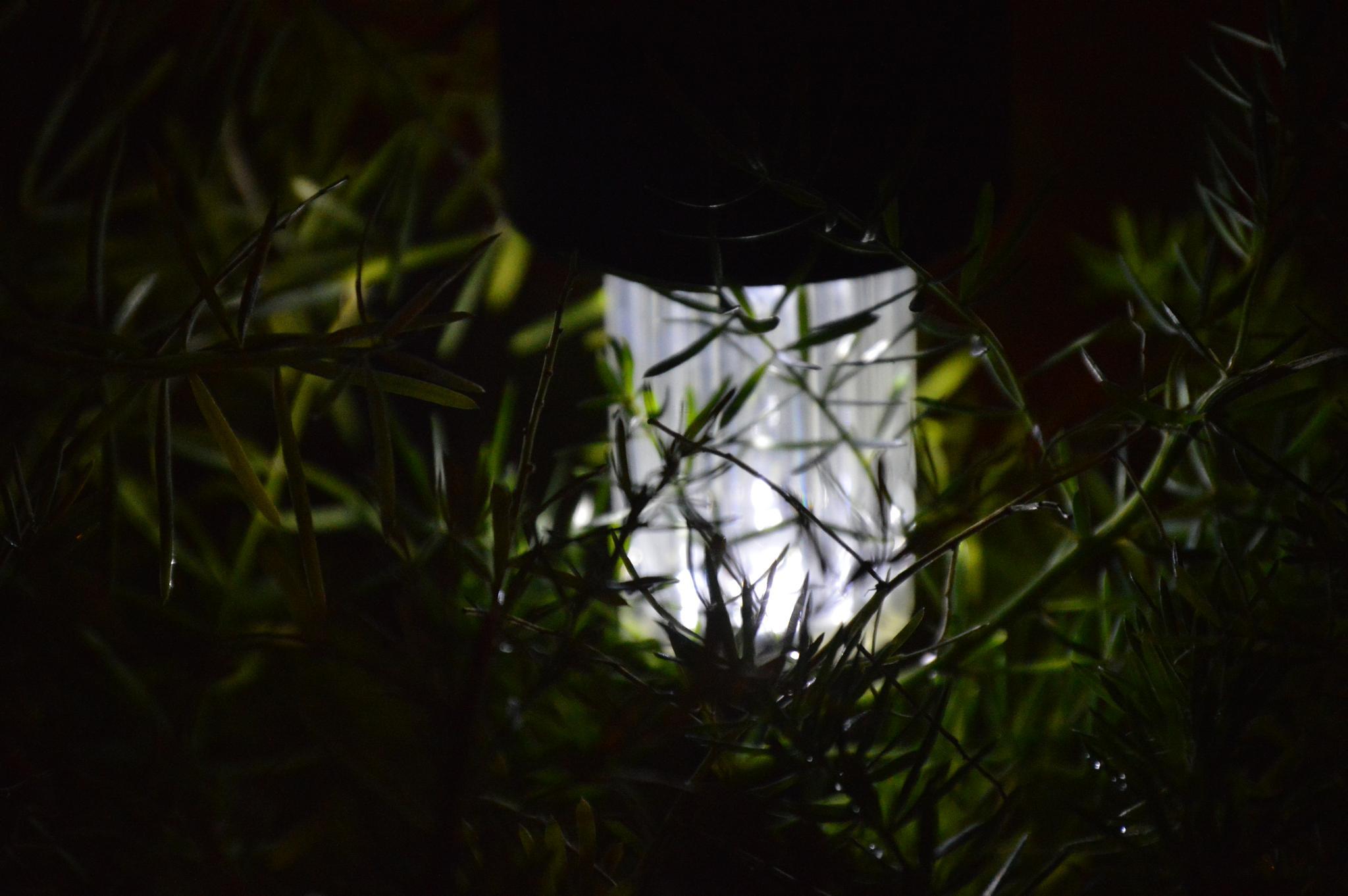 Garden light by Eduardo Vega H