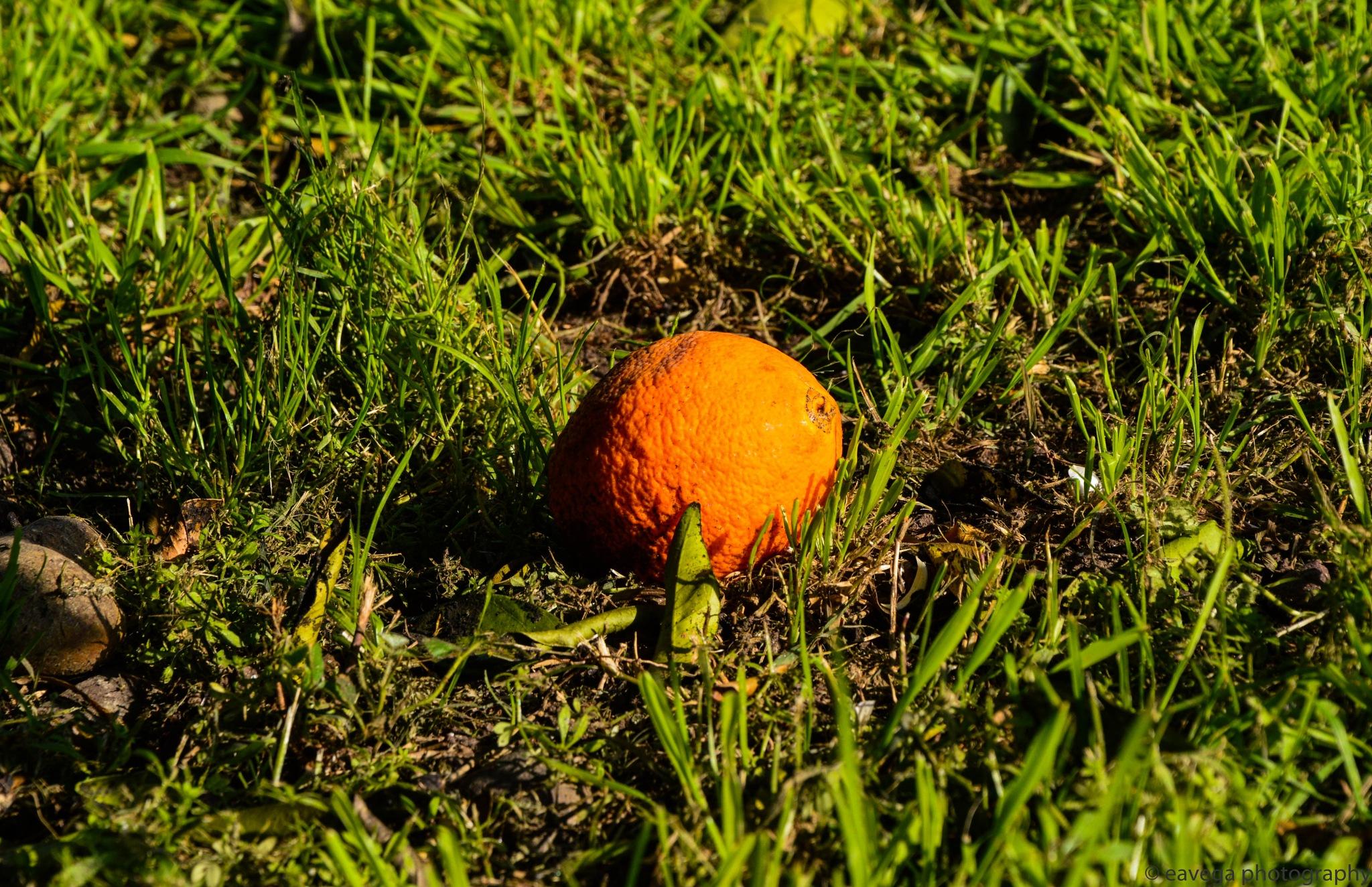 Orange by Eduardo Vega H