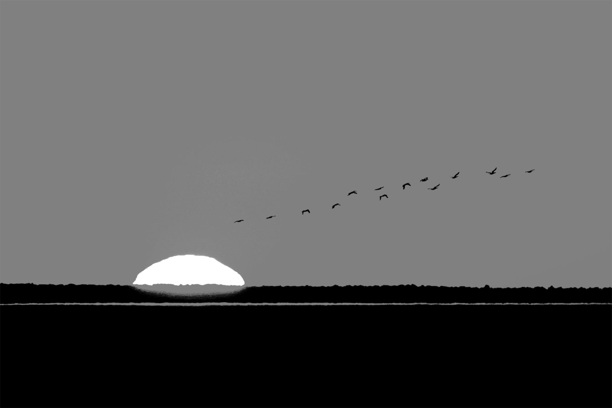 Göçmen Kuşlar ( Migratory Birds ) by Suleyman Bilgen