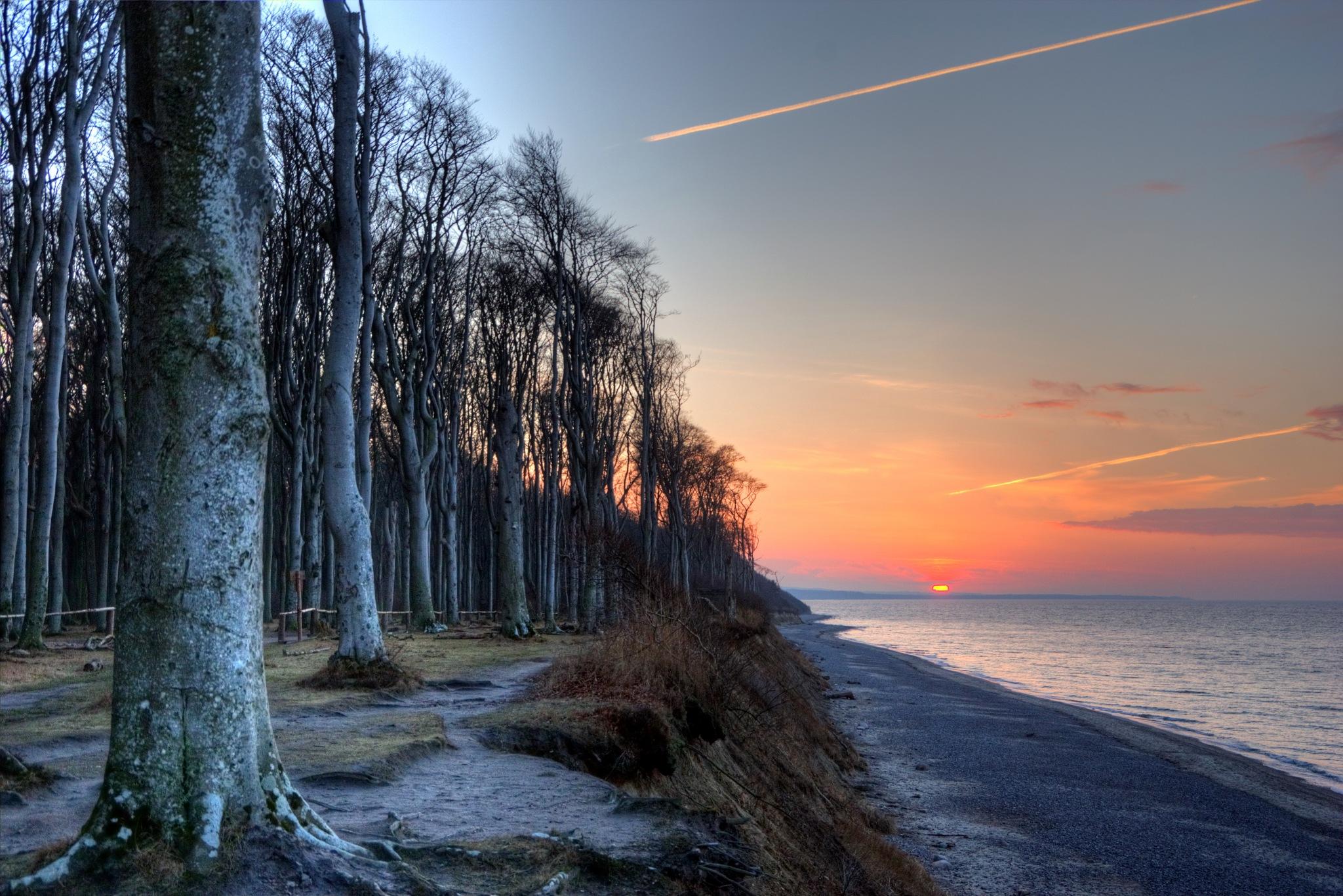 Gespensterwald Nienhagen Baltic Sea by diplompunk