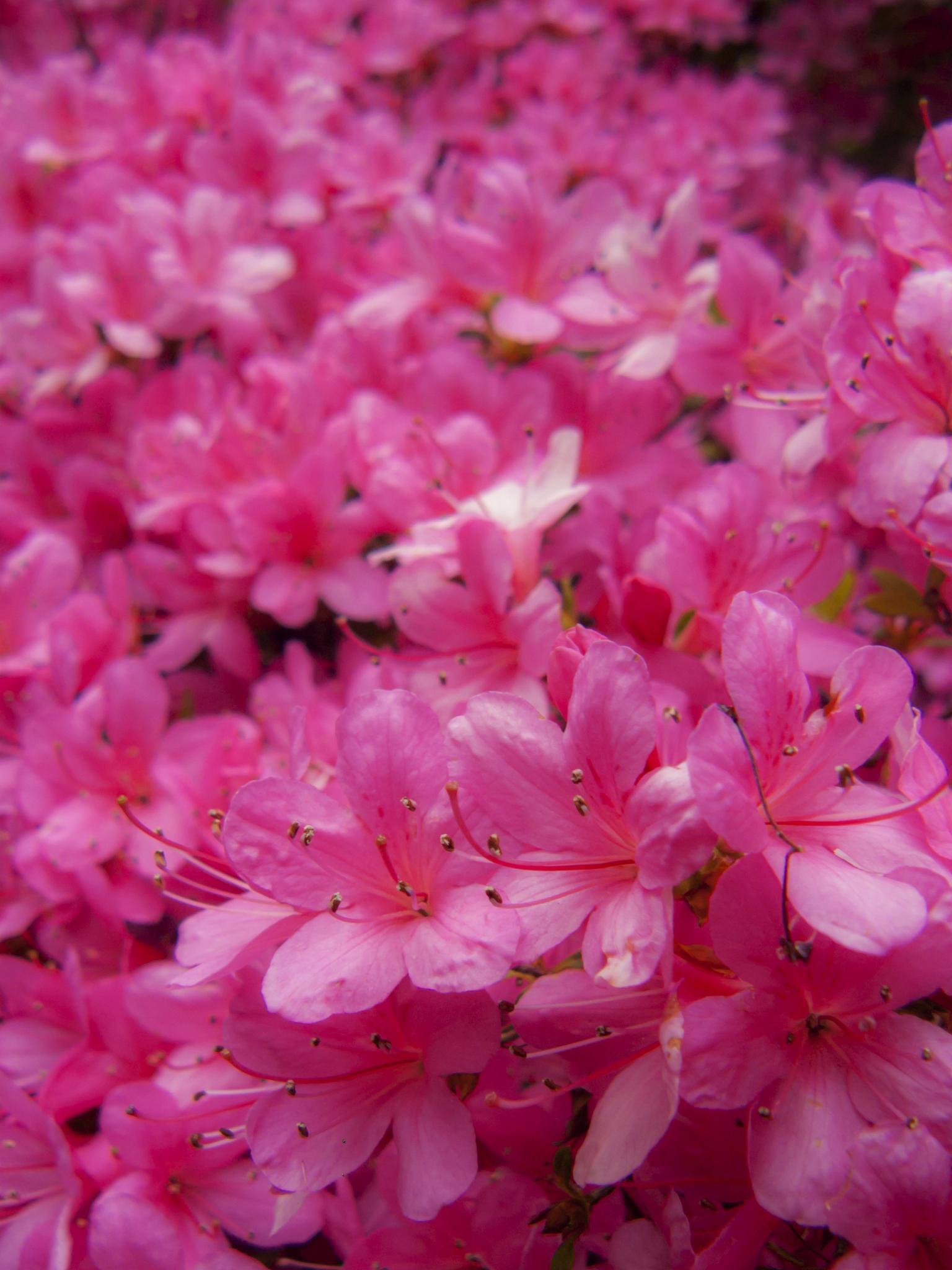 Spring Frenzy by Bota Dorin