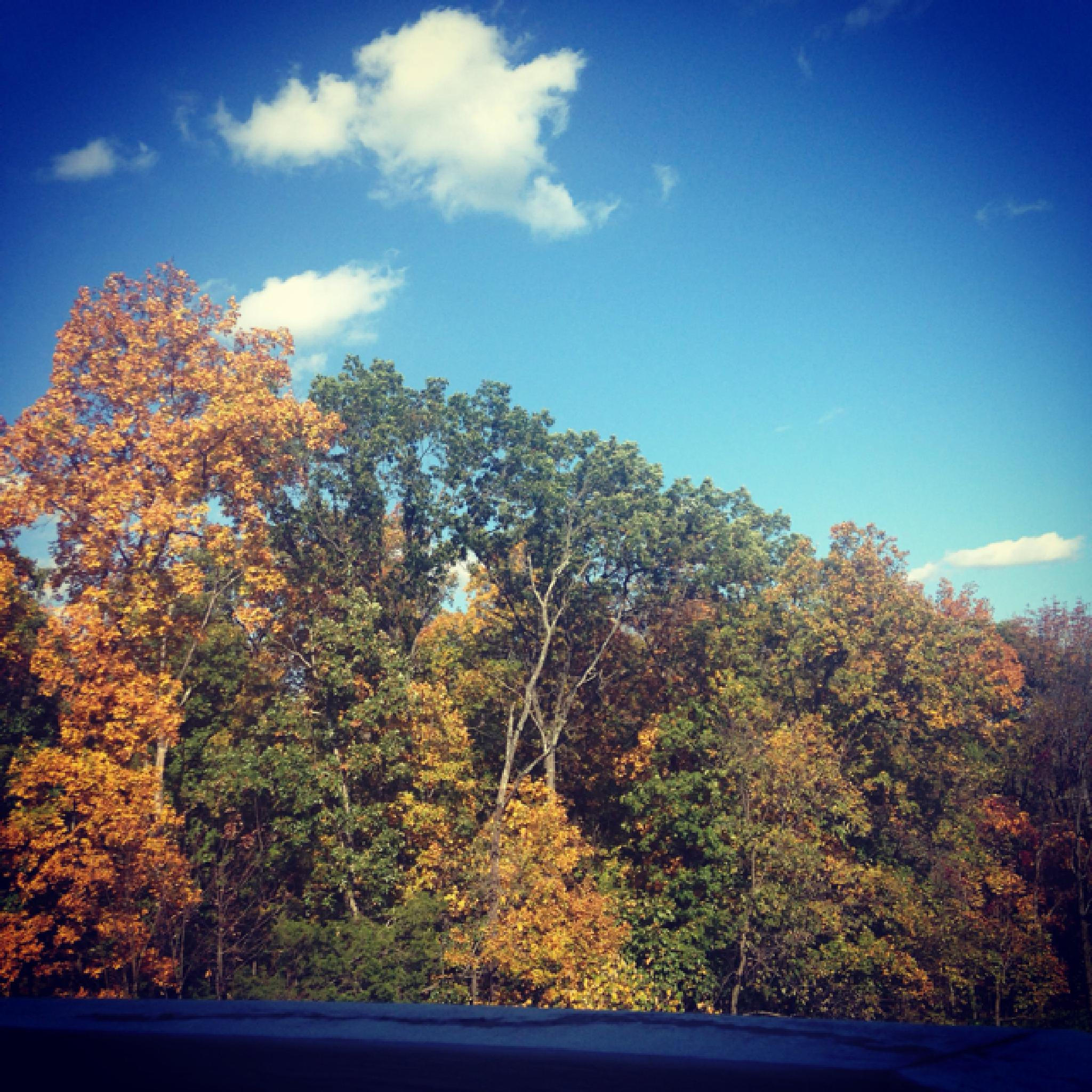 autumn from my phone by Saif