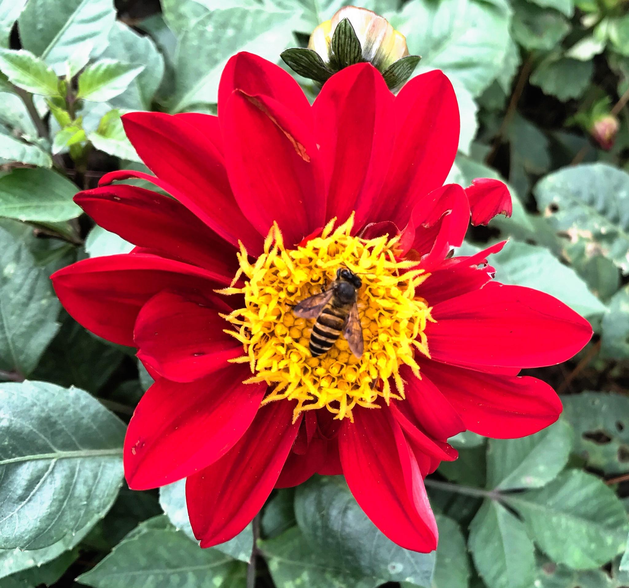 Flower  by Srinivasan Krishnamurthi