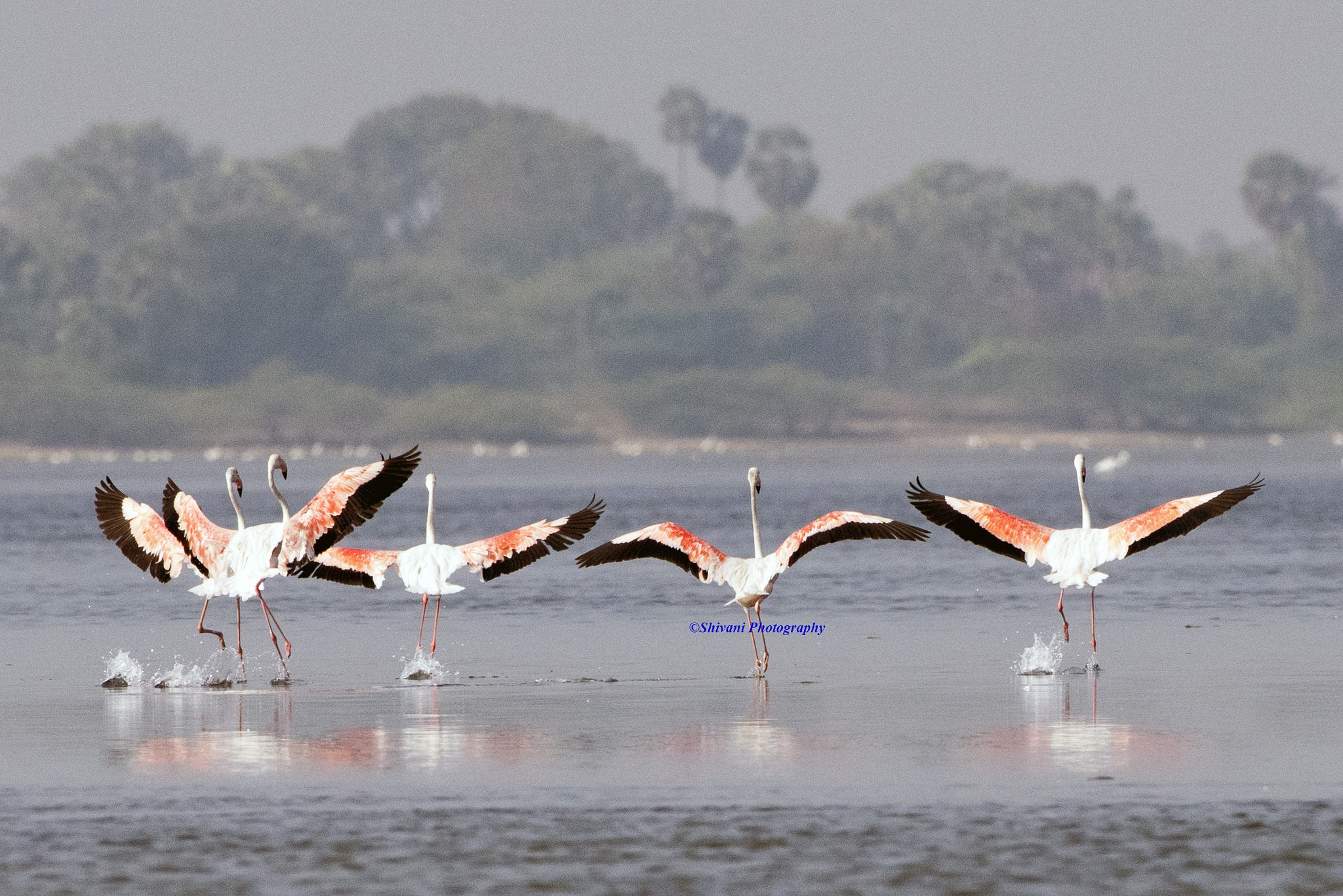 Spread your wings by Srinivasan Krishnamurthi