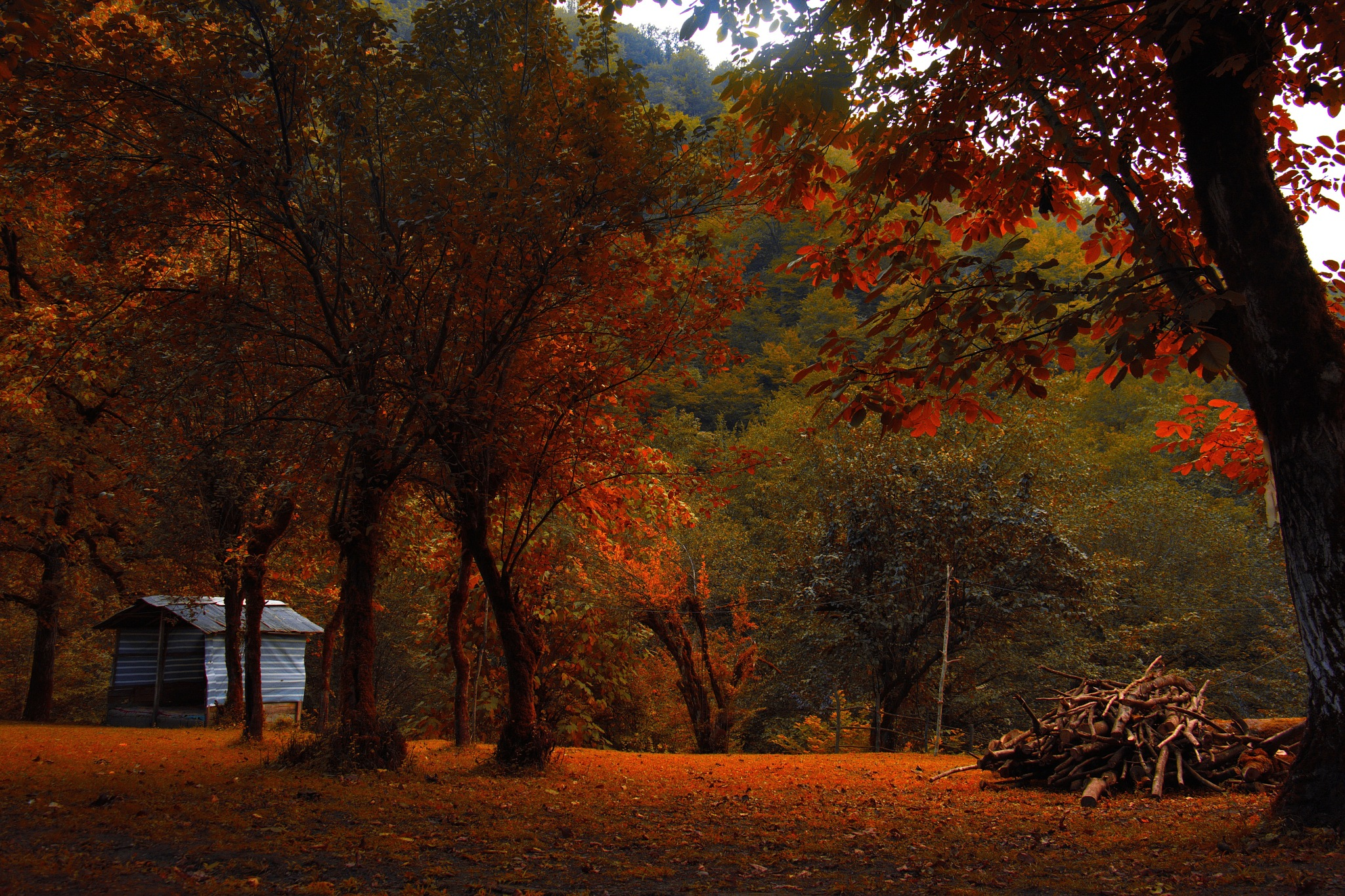 drowning in autumn by MOHSEN  TOLOUEI