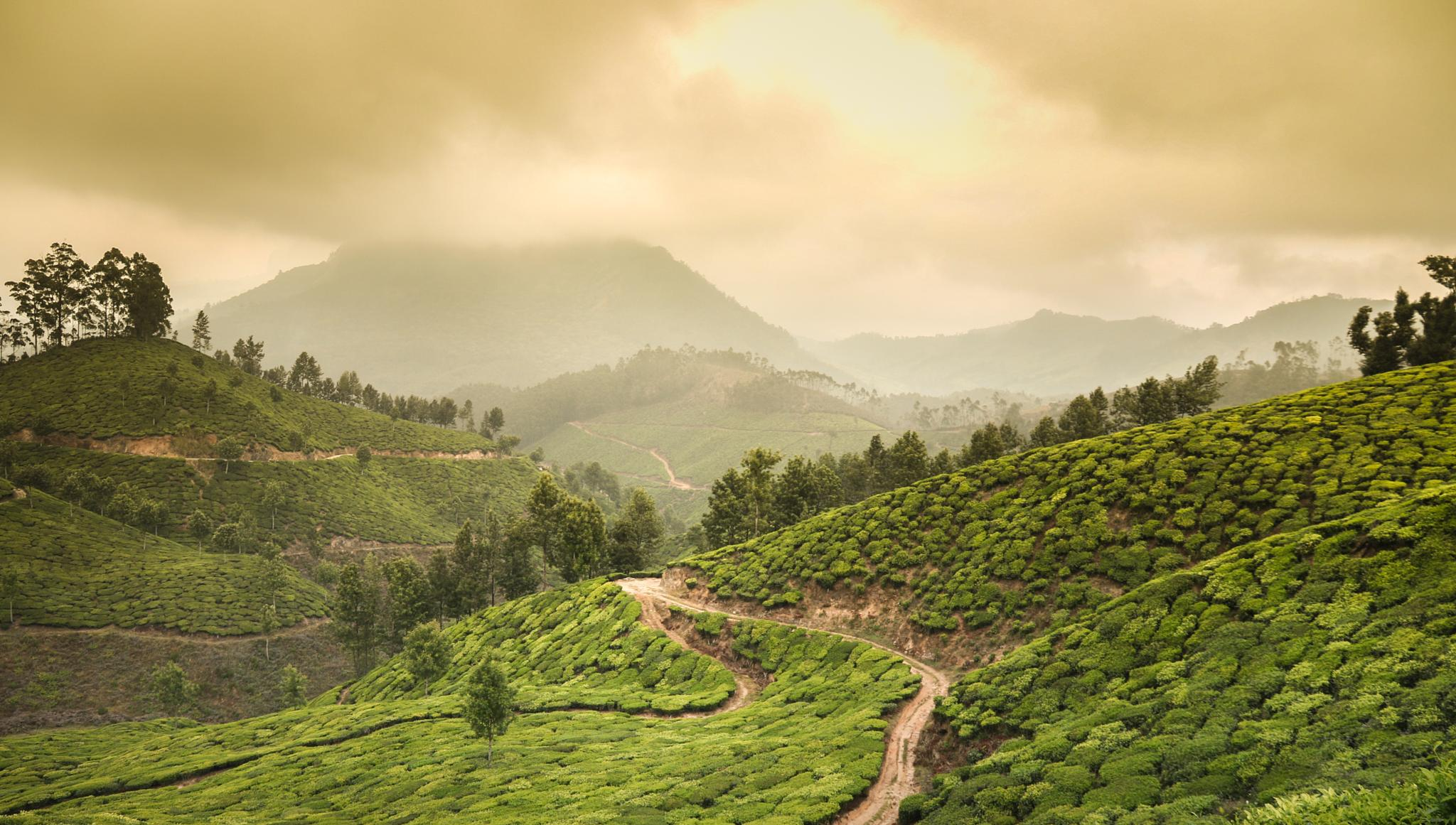 Land of Munnar by Talaster Rodrigues
