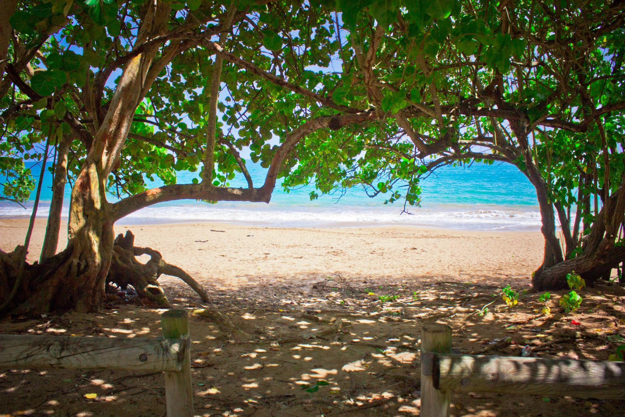 Entrance to the Beach by Jason Saint-Elie