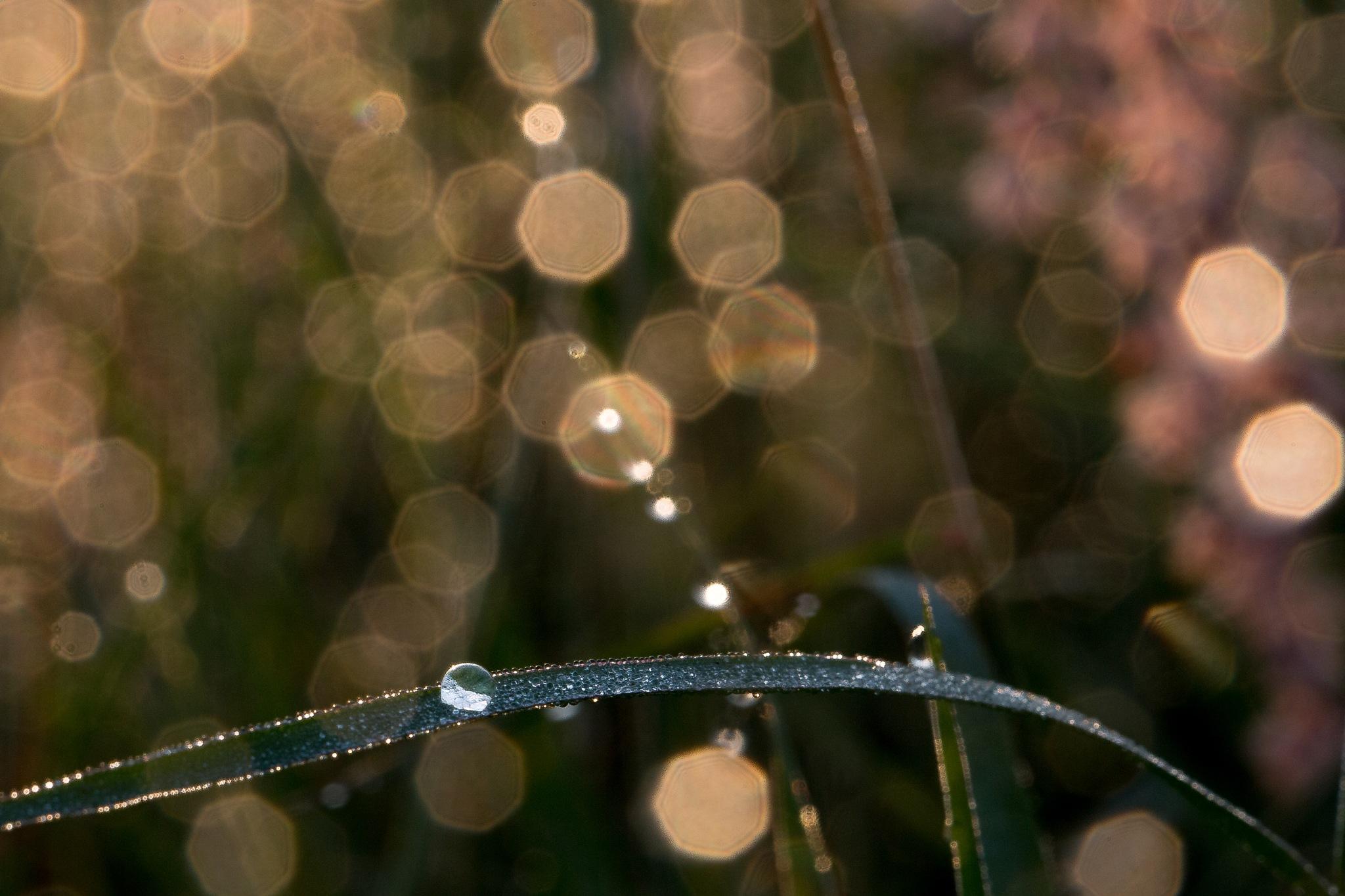 morning dew bokeh by LeonardoCardenasPhotography