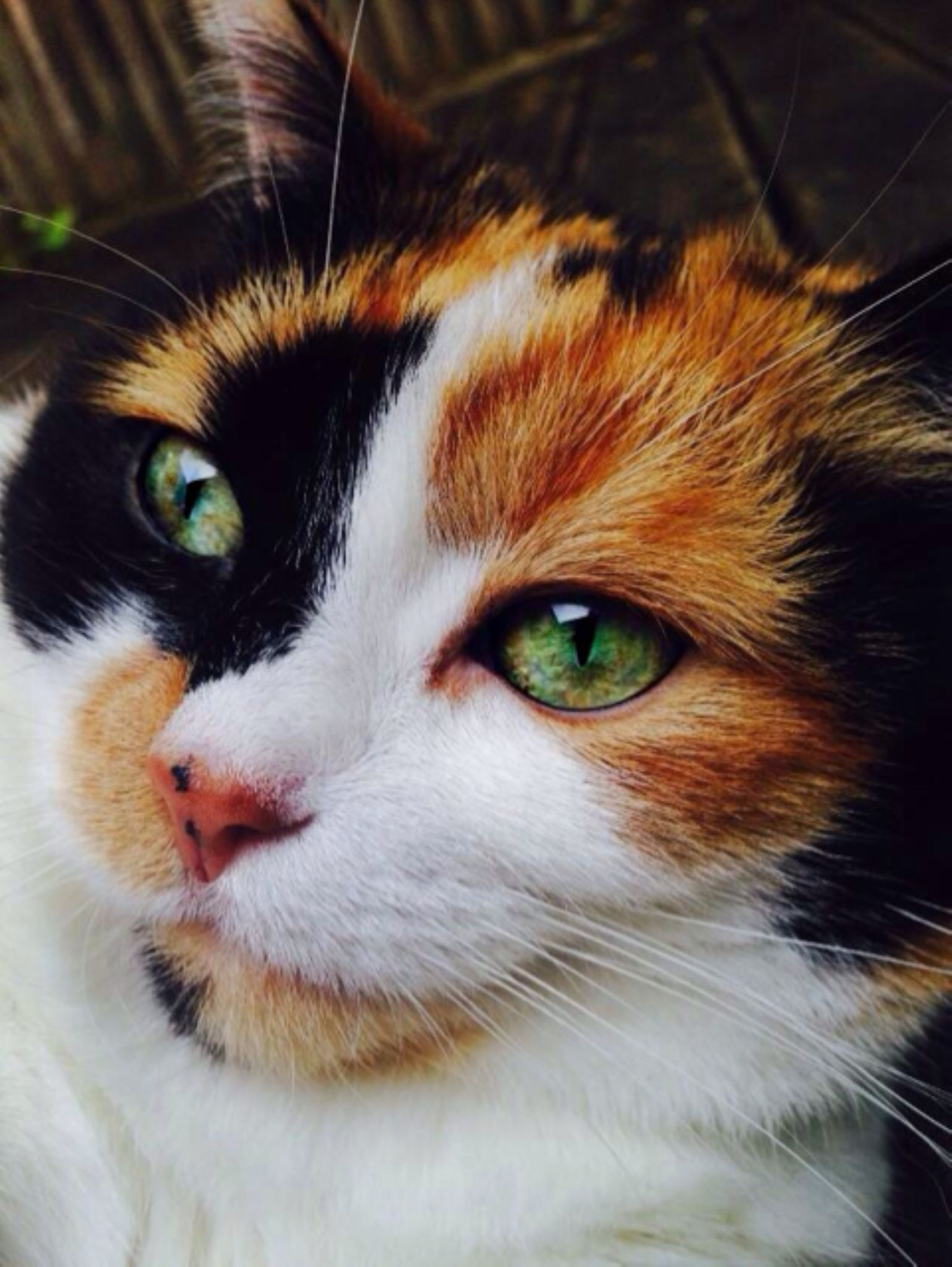Cats Eye  by ohhiimmorgan