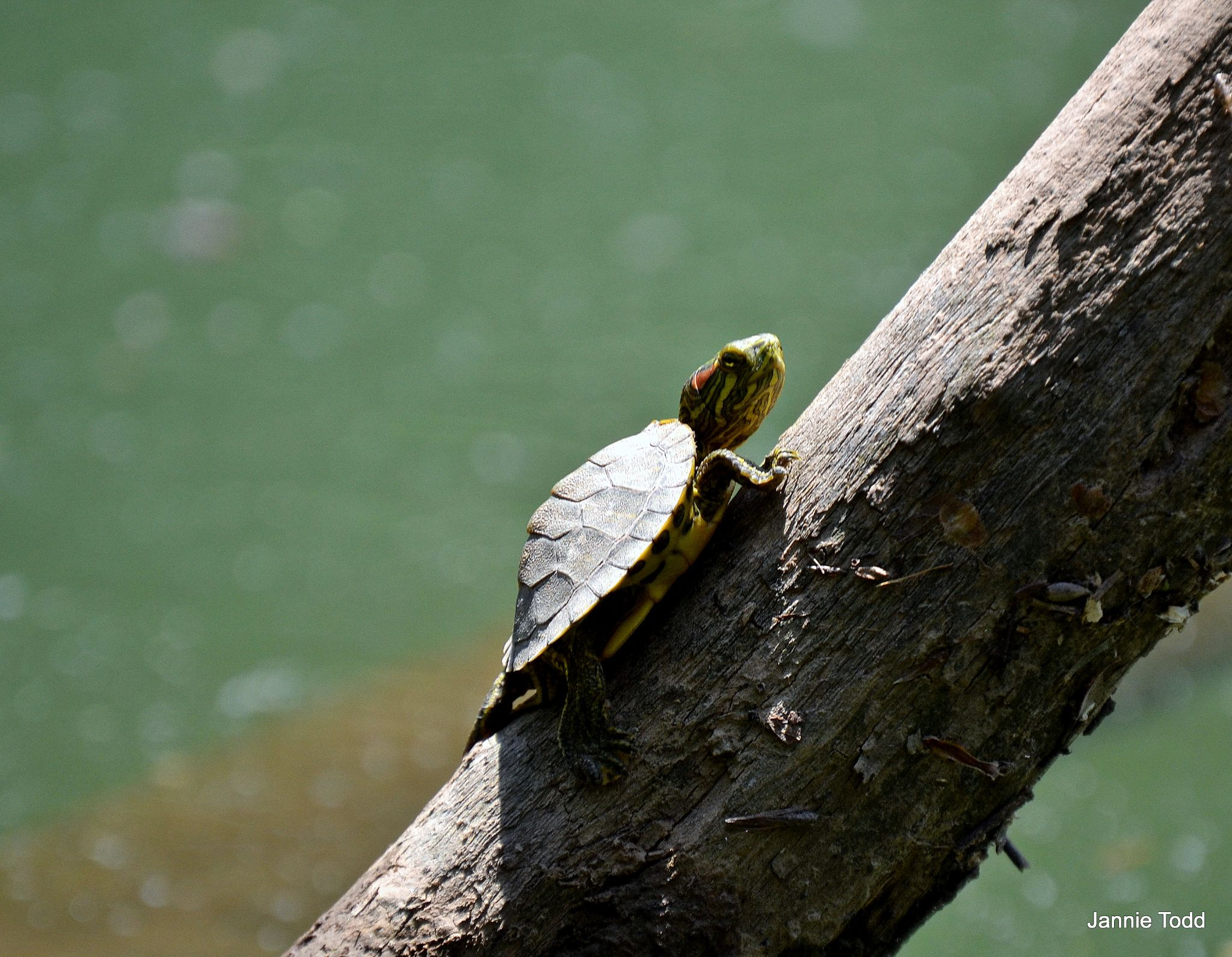 Little Turtle by jannie.todd