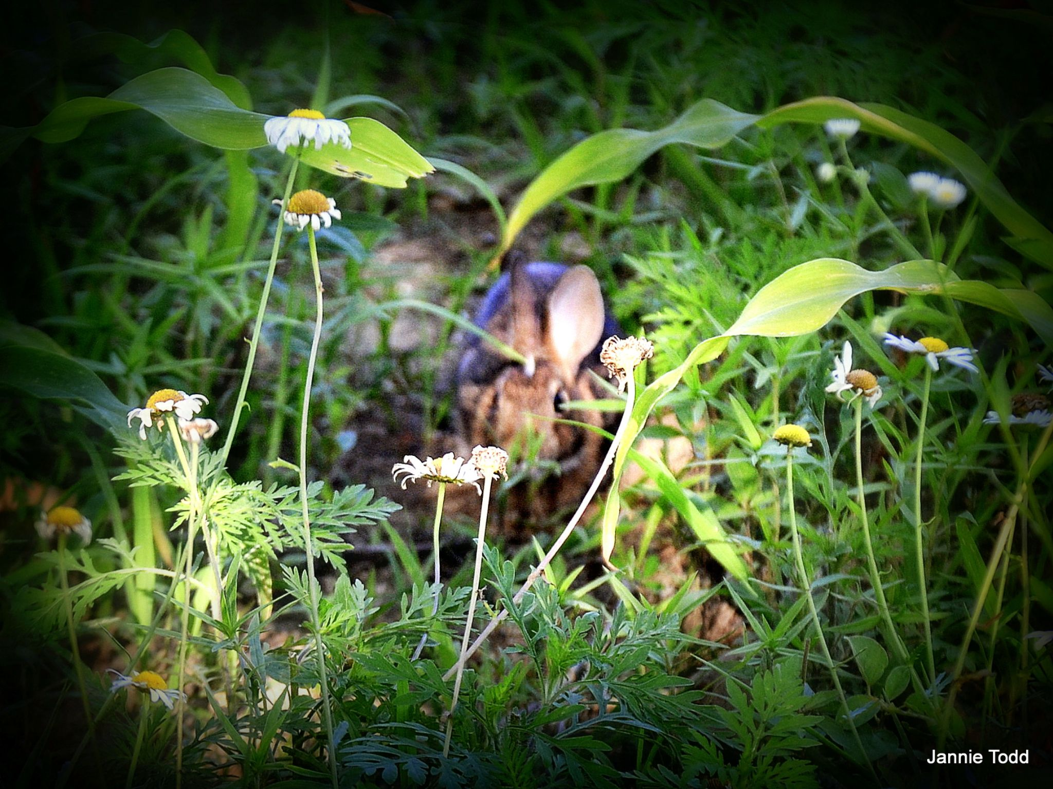 Shhh I am hunting wabbits by jannie.todd