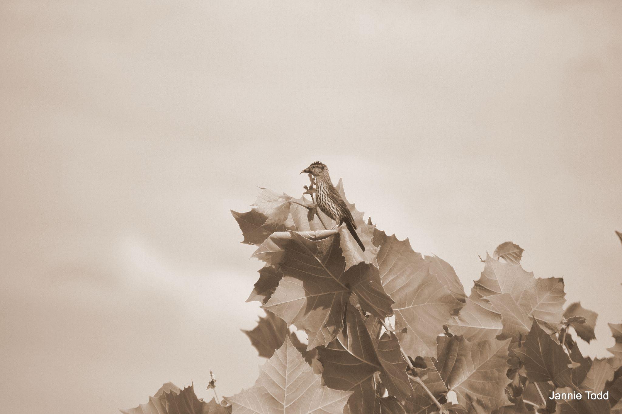 Treetop Wathcher by jannie.todd