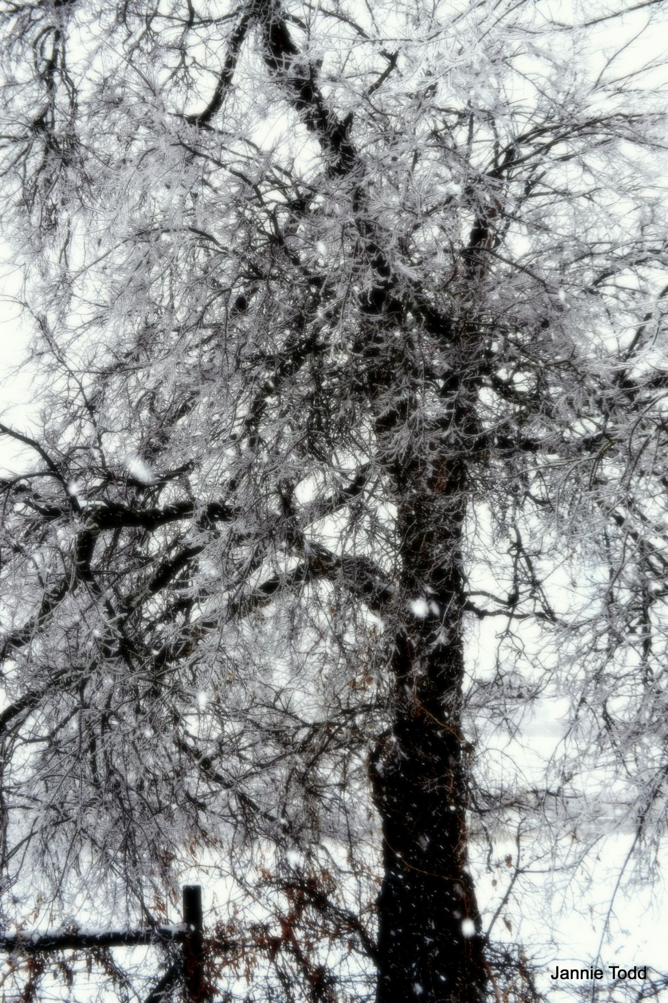 Shimmery Tree by jannie.todd