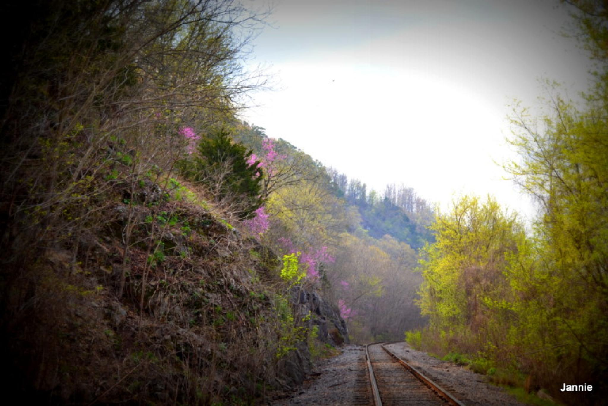 Railroad Track by jannie.todd